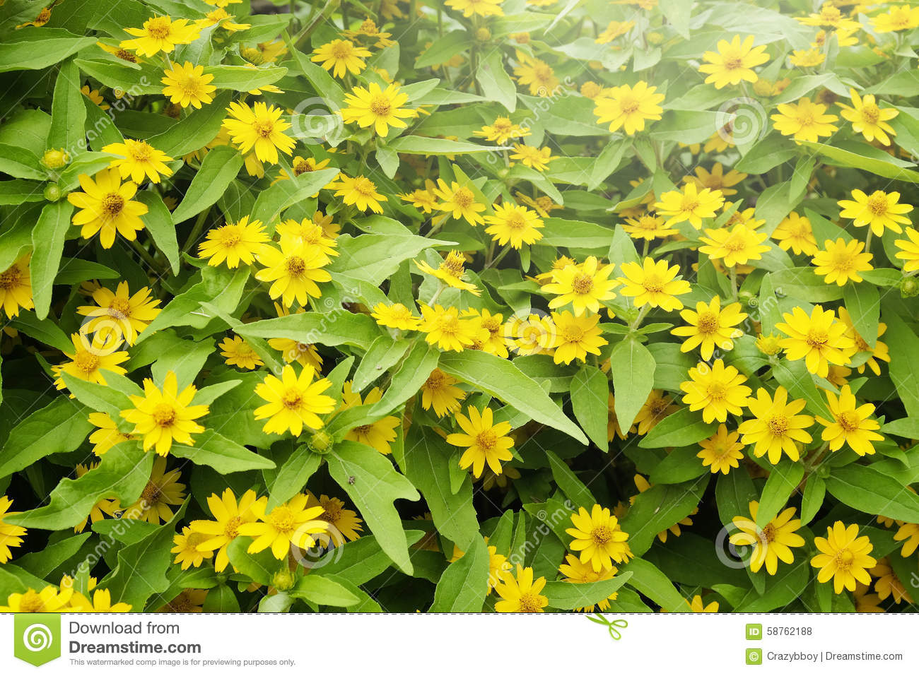 Background of small yellow flowers stock photo image of colorful download background of small yellow flowers stock photo image of colorful flora 58762188 mightylinksfo