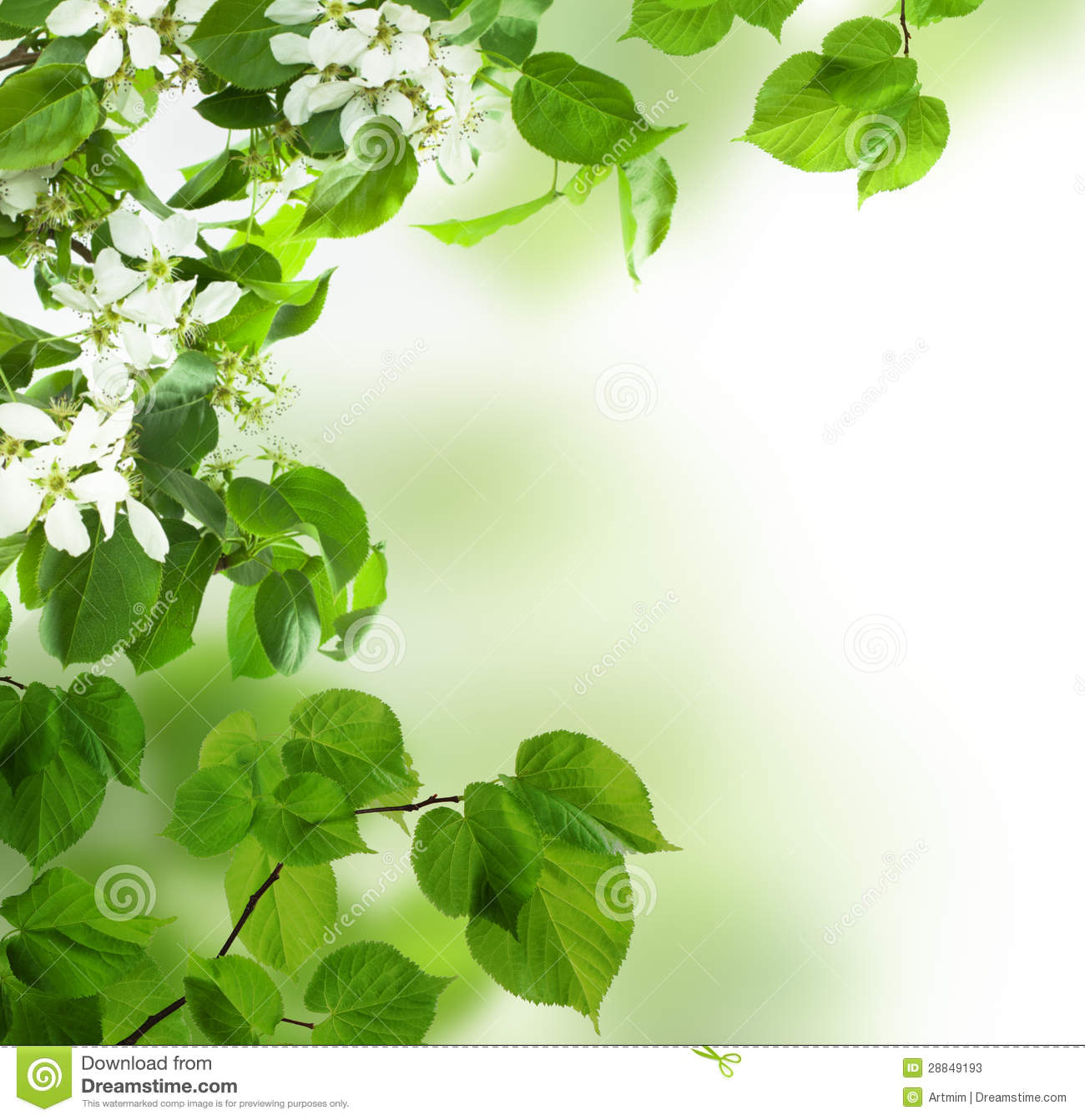 Spring Green Leaves And Flowers Background With Plants: Background, Spring Leaves And Flowers Stock Photos