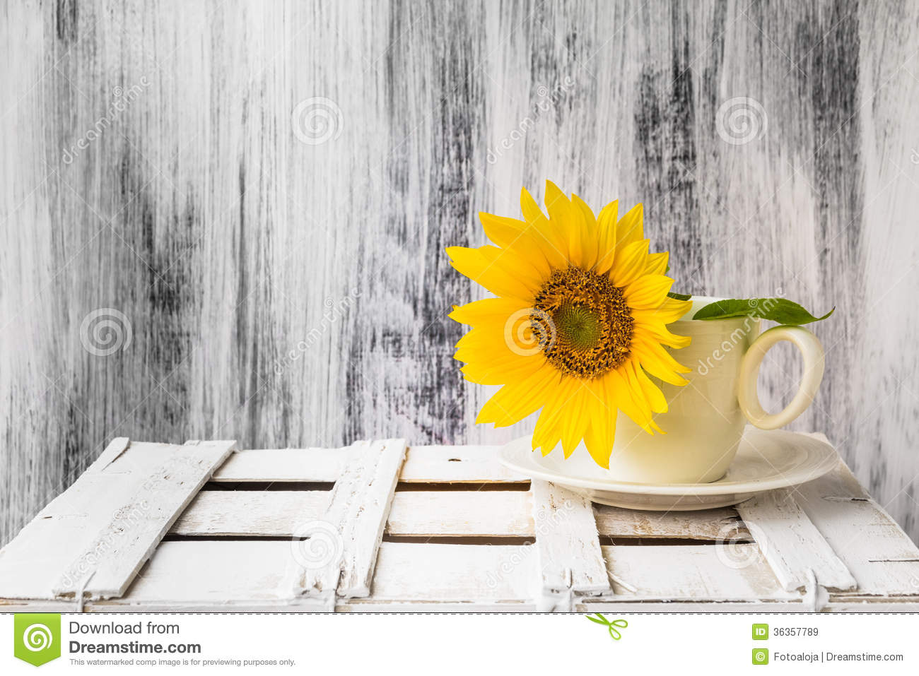 Background Still Life Flower Sunflower Wooden White Vintage Cup