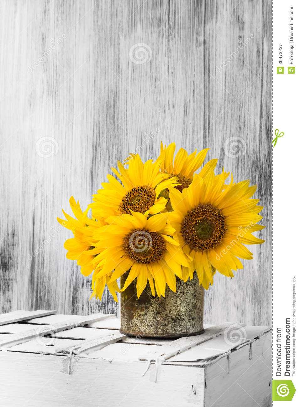 Download Background Still Life Flower Sunflower Wooden White Vintage Stock Image