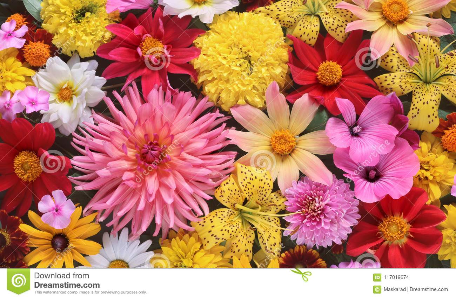 Background Of Summer Garden Flowers, Top View. Stock Photo