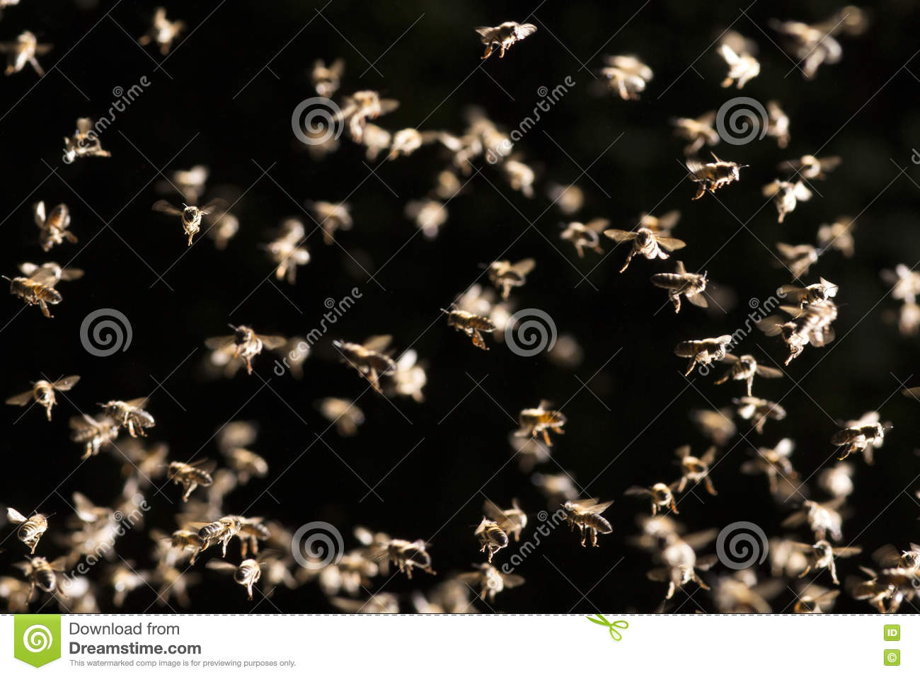 Background Of Swarm Of Bees Flies Over The Open Evidence ...