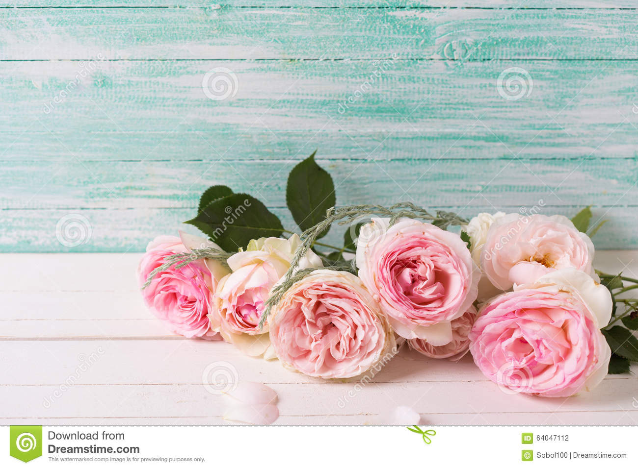 Background With Sweet Pink Roses Flowers On White Painted