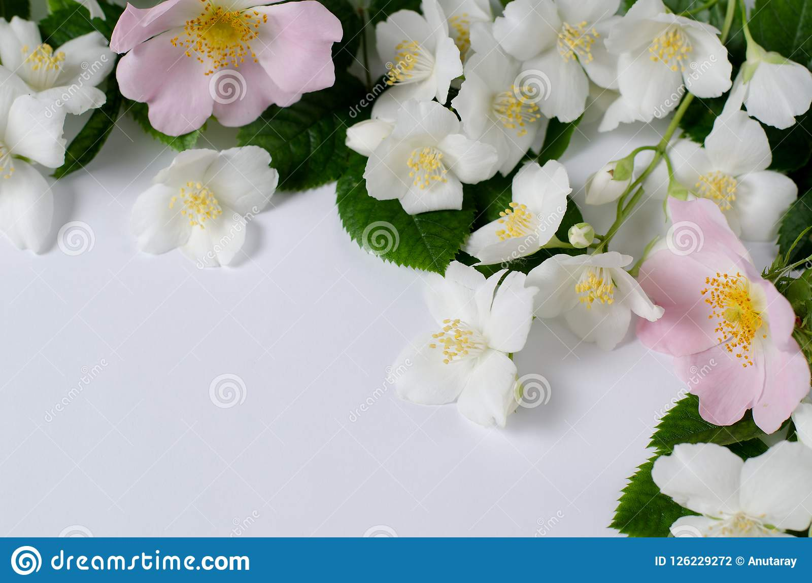 Background Of Tea Roses And Jasmine Flowers Romantic Spring