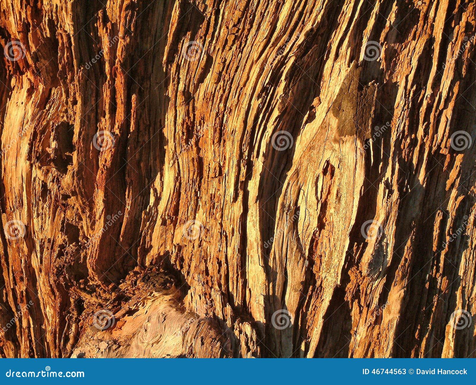 tree log texture