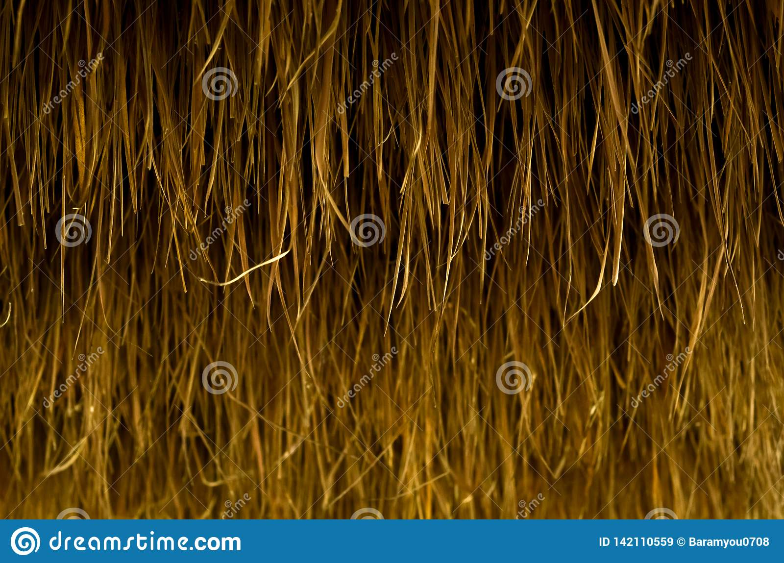 Background and texture photo of dry blady grass