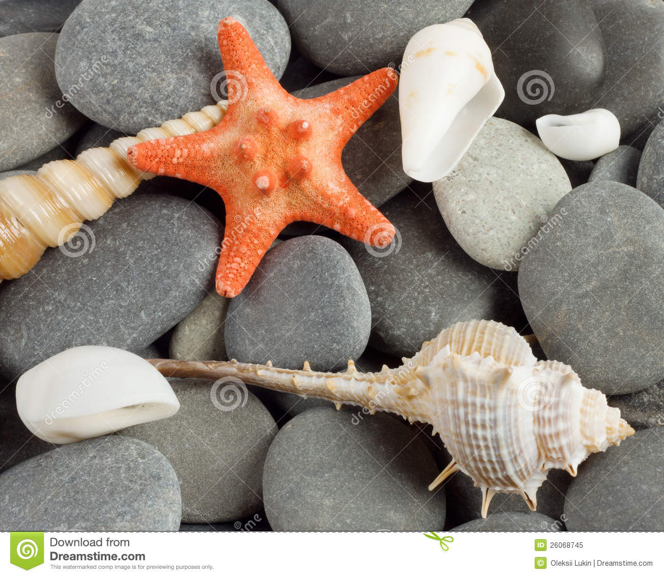 Background To Marine Mollusks And The Star Royalty Free ... L Mollusks