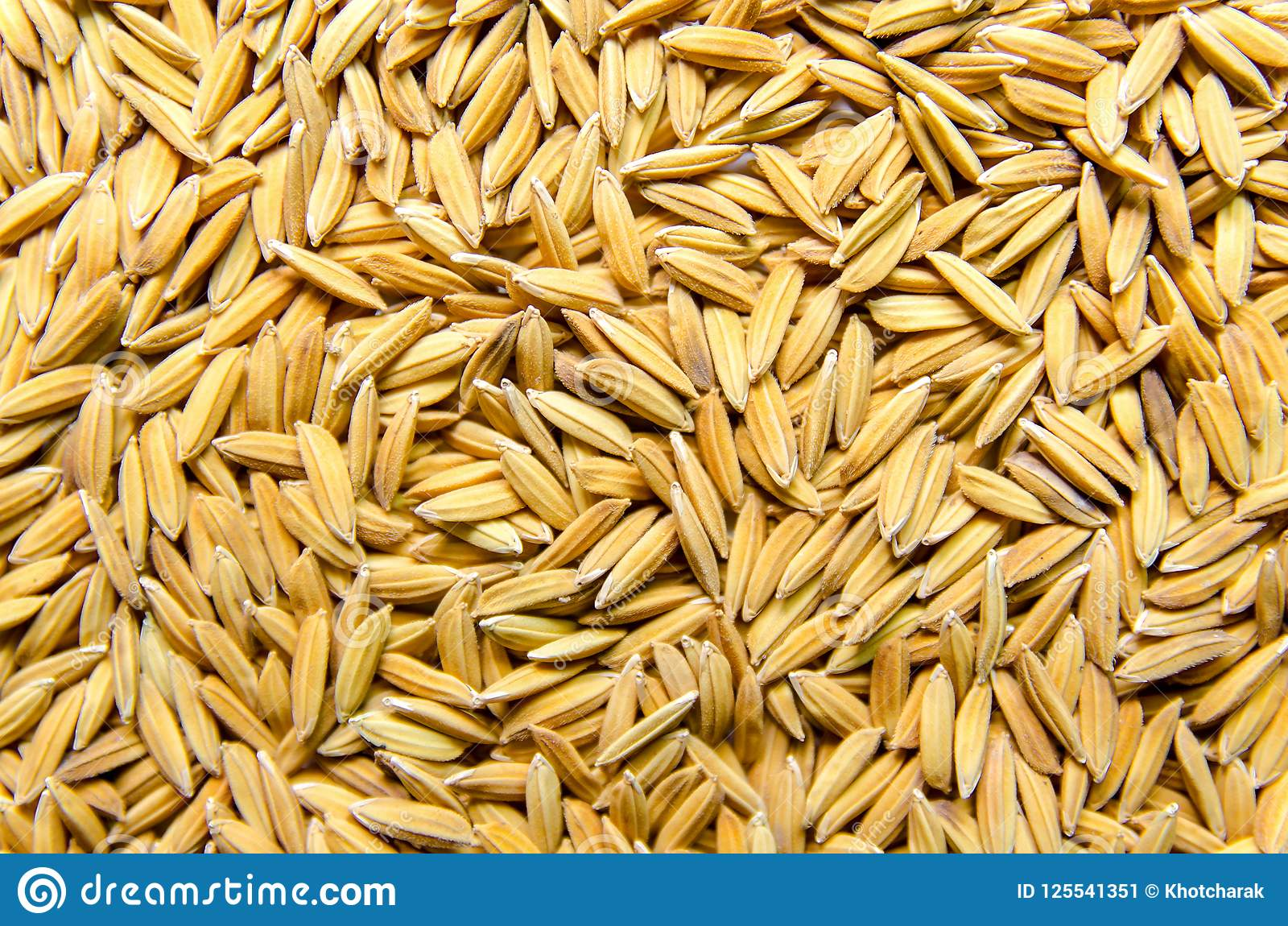 Background And Wallpaper By Pile Of Paddy Rice And Rice Seed Stock Image Image Of Beautiful Farmer 125541351