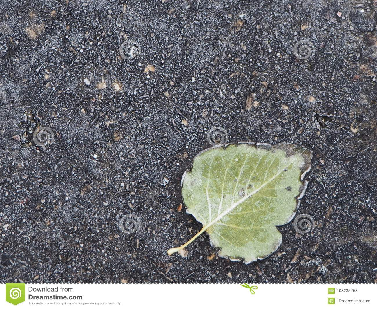 Frozen green leaf stuck to the pavement
