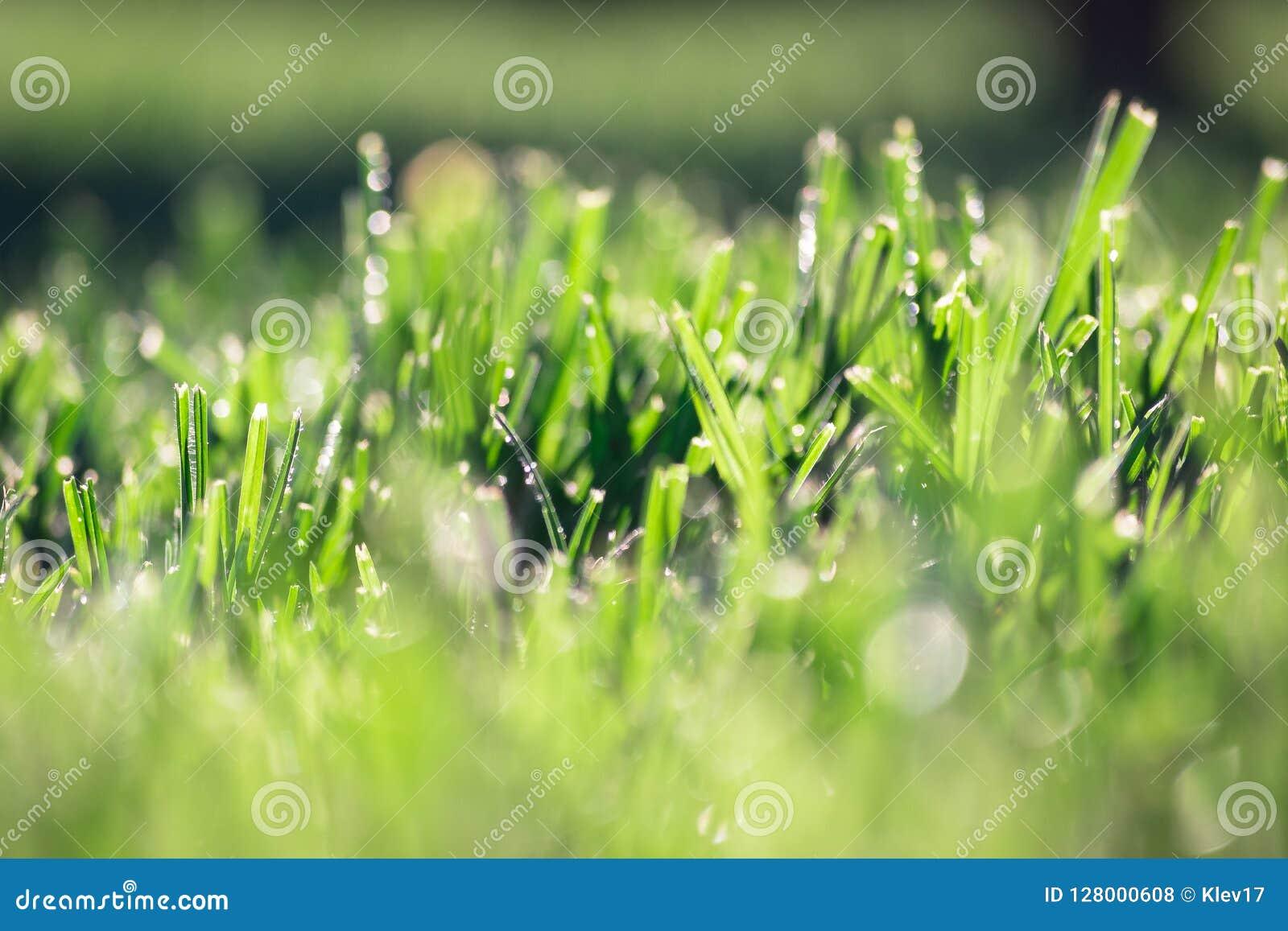 Background wallpaper texture of grass