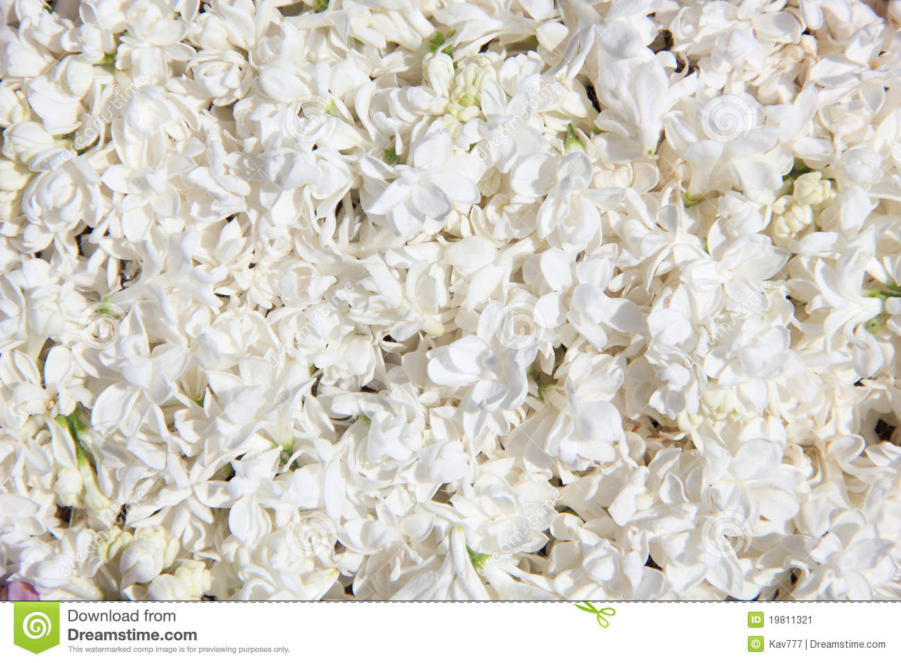 Background Of White Lilac Flowers Stock Image Image Of Natural