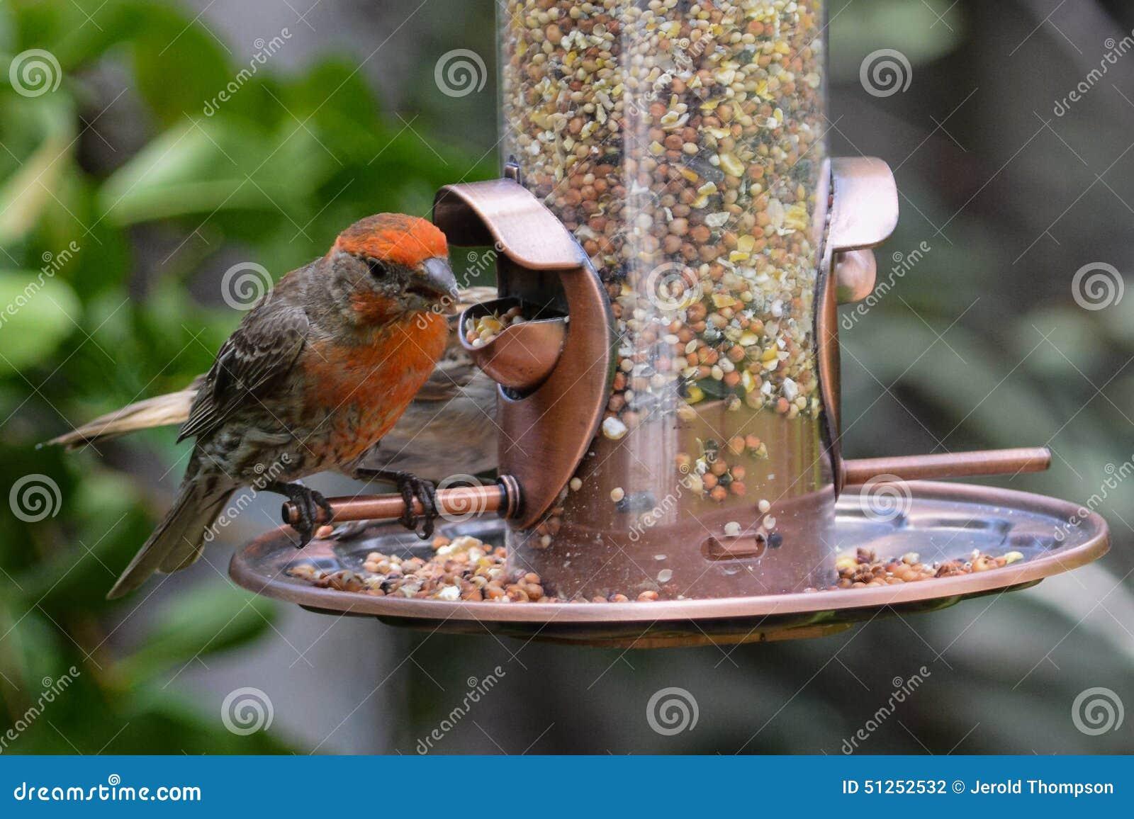 Backyard Bird Feeder - Backyard Bird Feeder Stock Photo. Image Of House, Male - 51252532