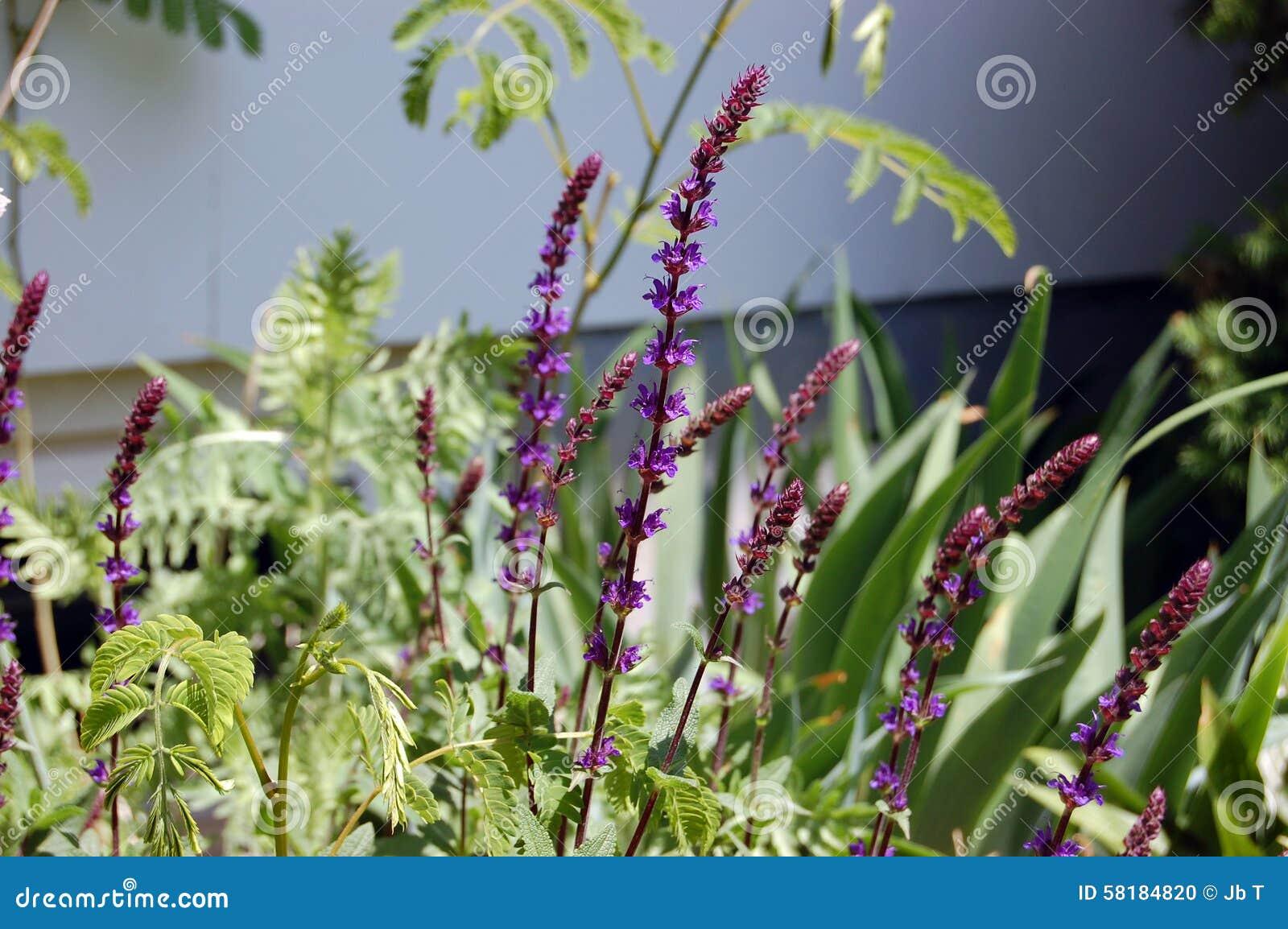 Backyard garden landscape fuzzy purple flower stalk stock photo backyard garden landscape fuzzy purple flower stalk mightylinksfo