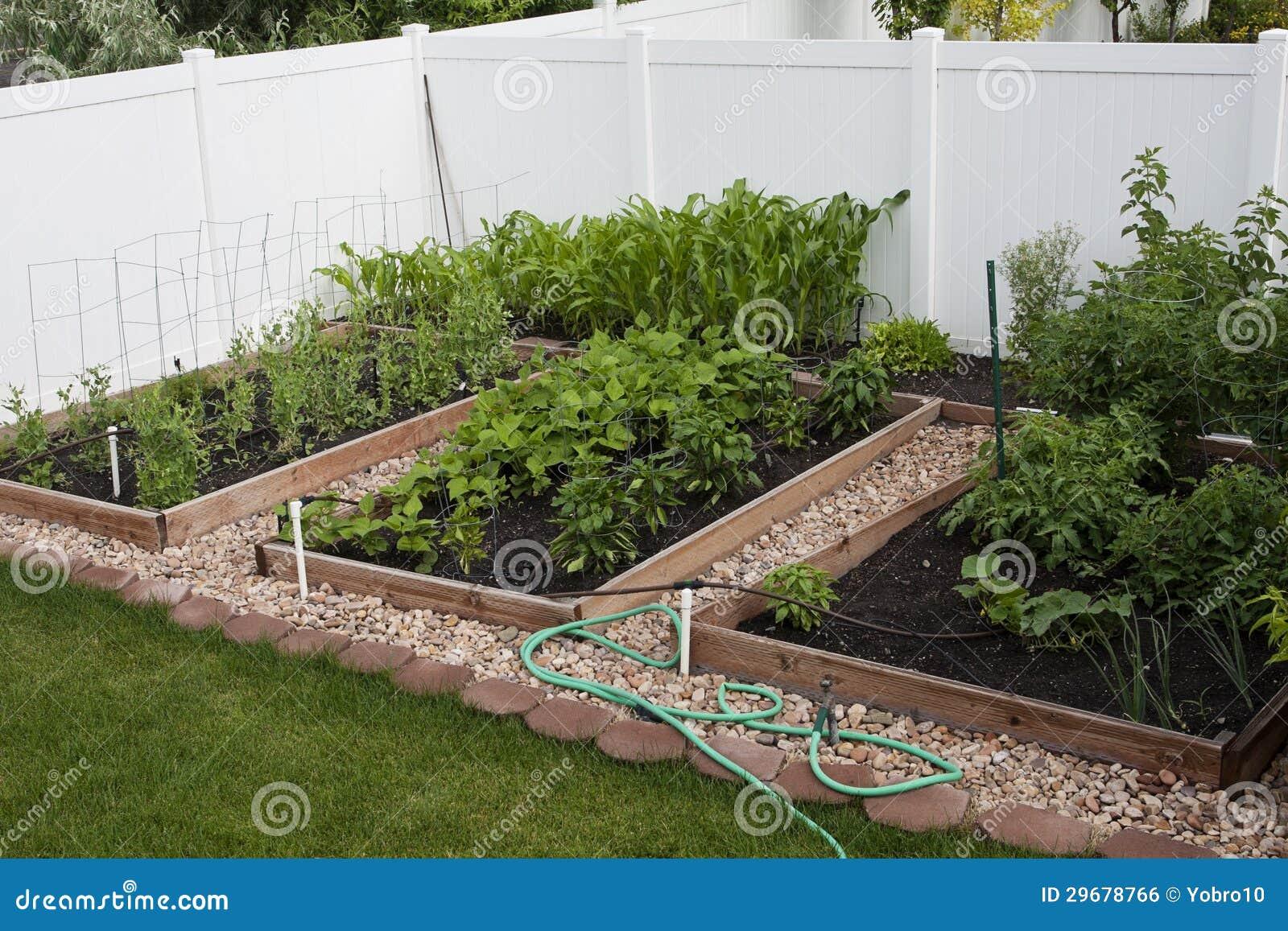 Backyard Vegetable Garden Business : Backyard Organic Vegetable Garden Royalty Free Stock Image  Image