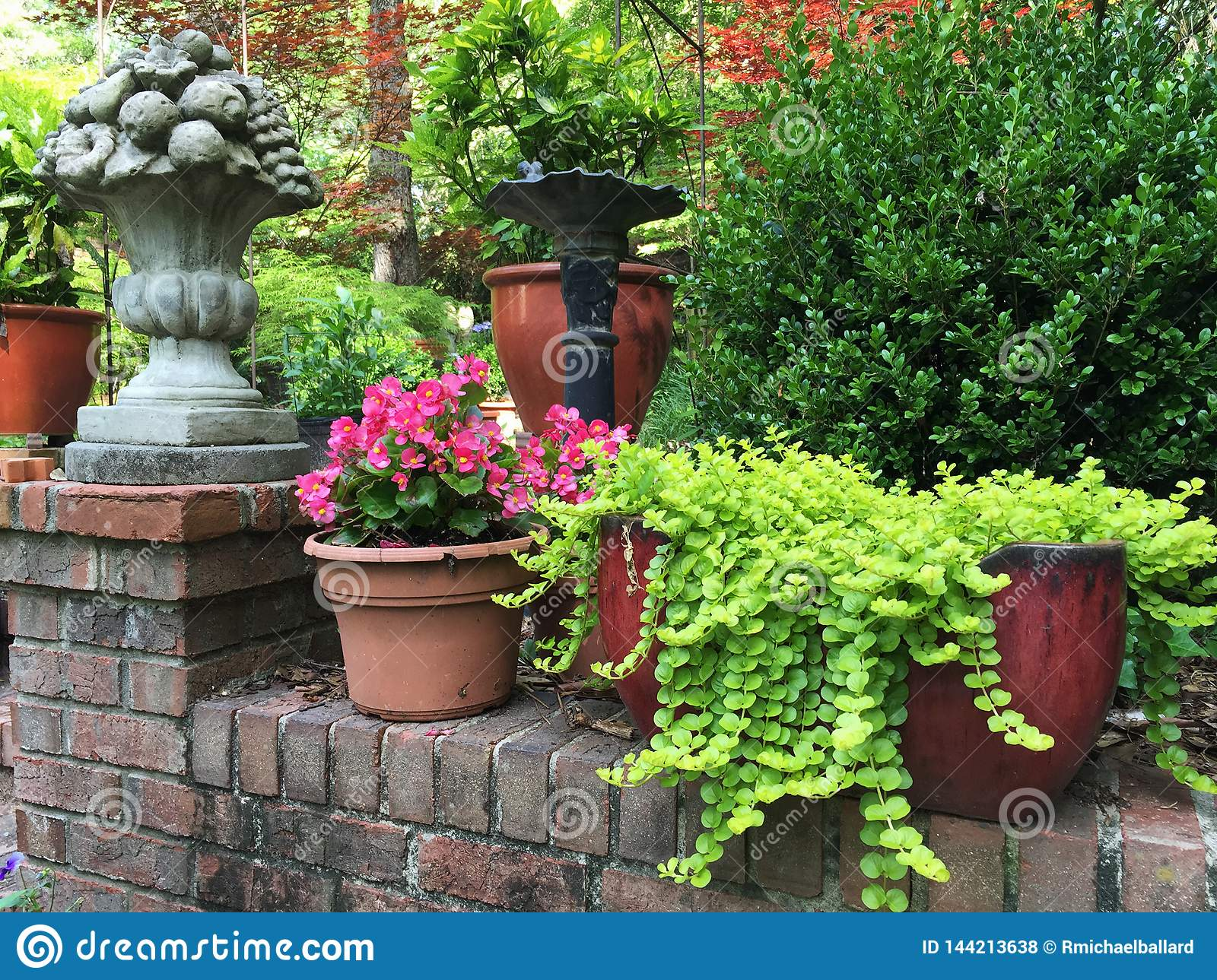 Backyard Patio Container Garden With Plants And Flowers Stock