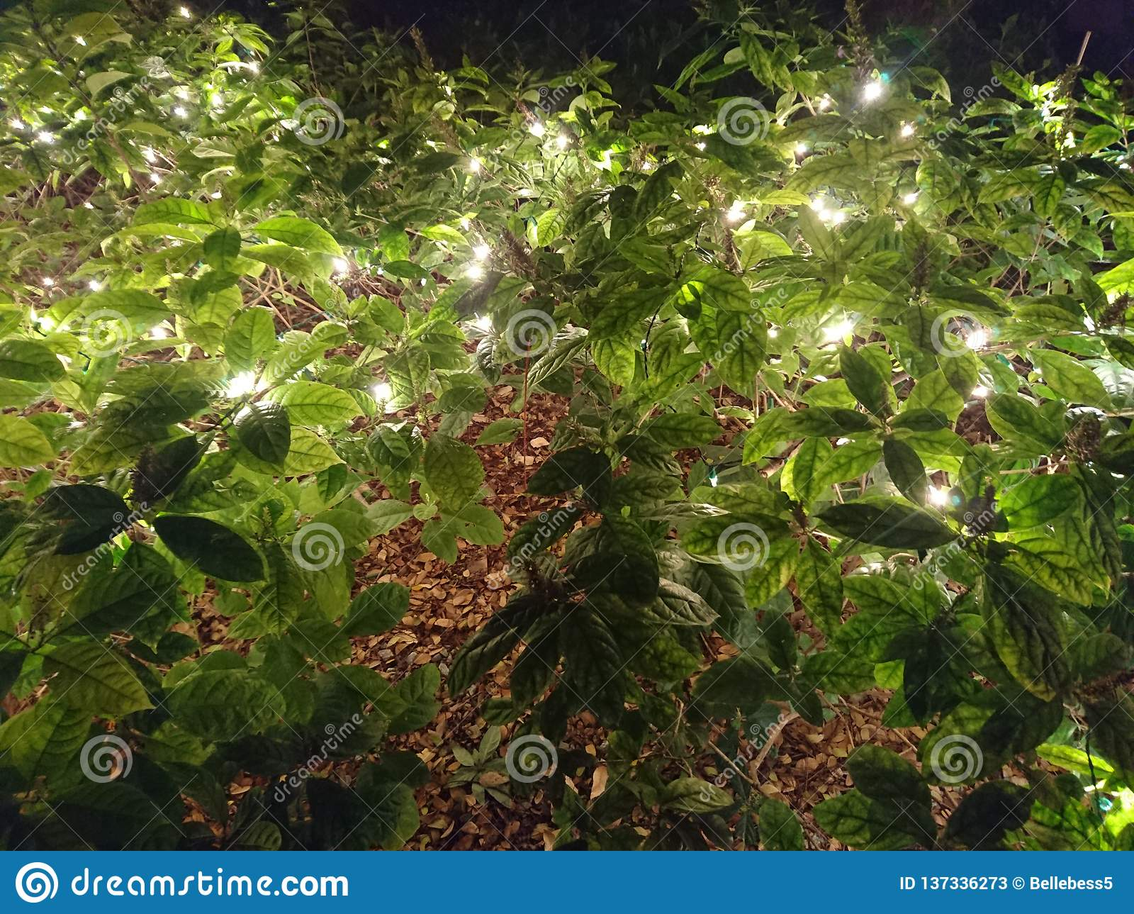 Backyard Patio Light In Shrubs To Light A Street Stock Image