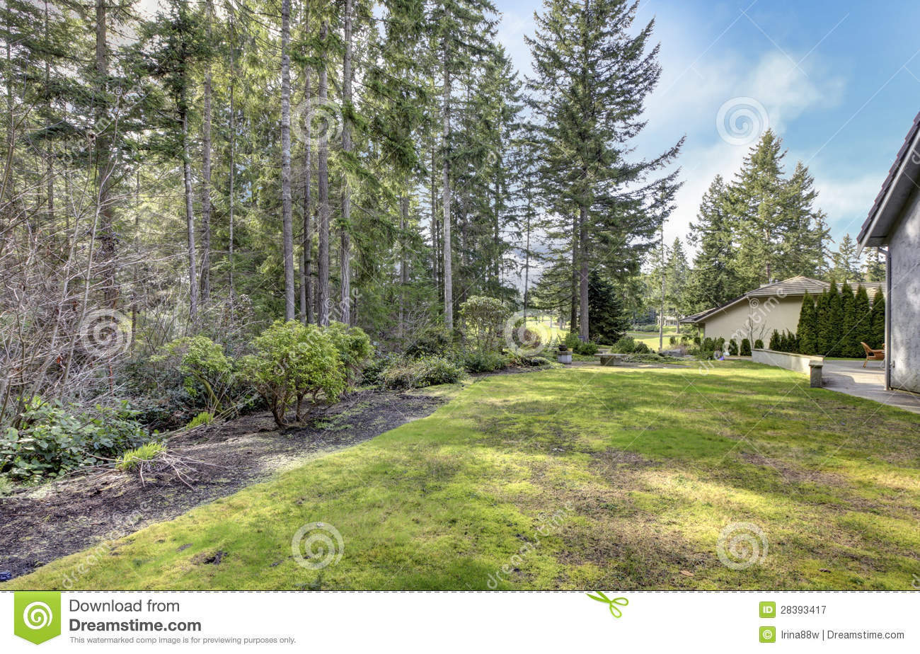 Backyard With Pine Trees And Side Of The House.