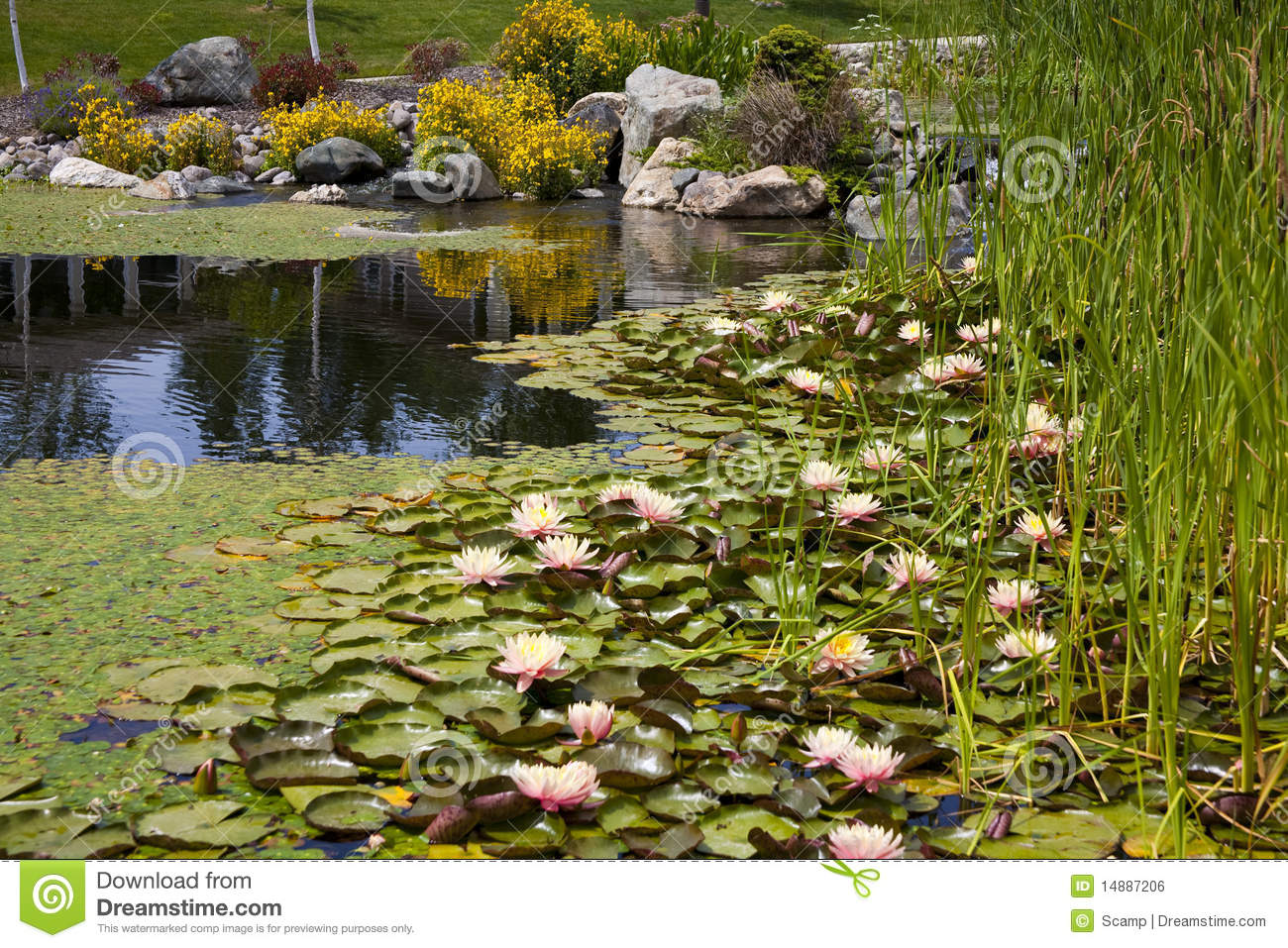 Backyard pond water feature stock photo image 14887206 for Garden pond unlimited