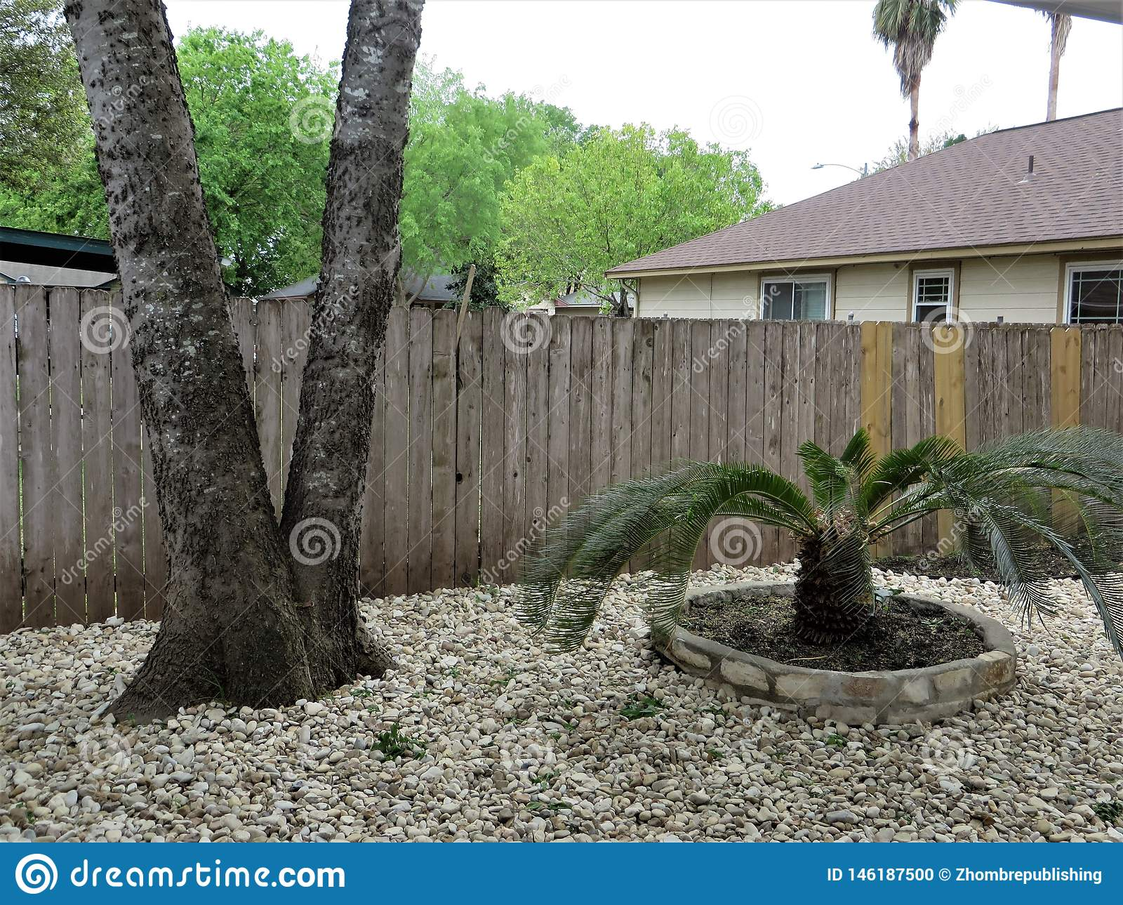 Xeriscape Yard Austin Texas Stock Photo Image Of Landscape Yard 146187500