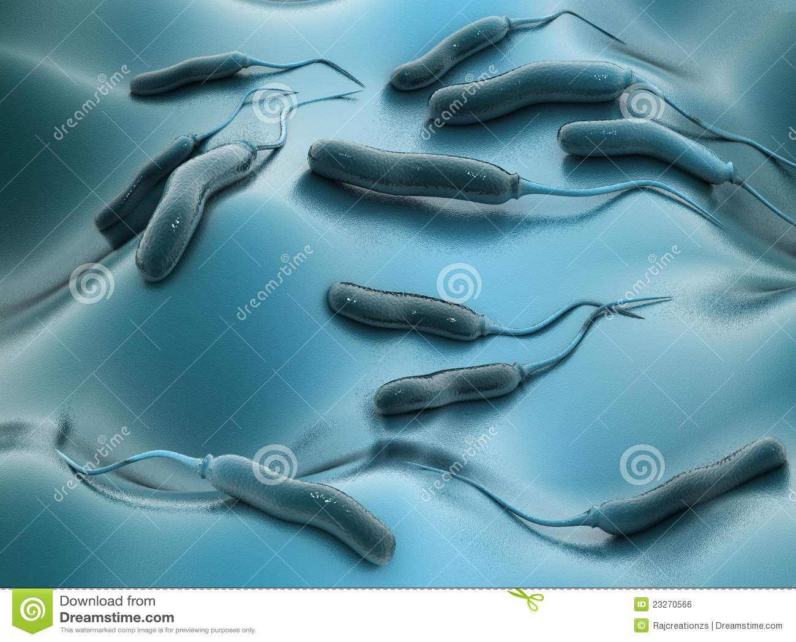 Bactérias de E coli