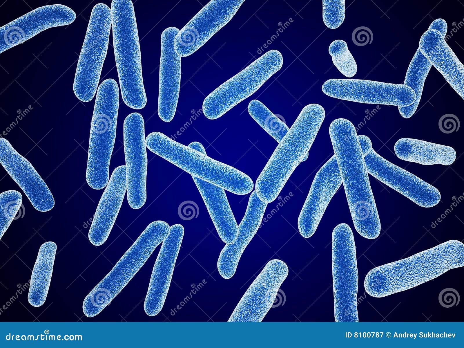 Bactérias macro