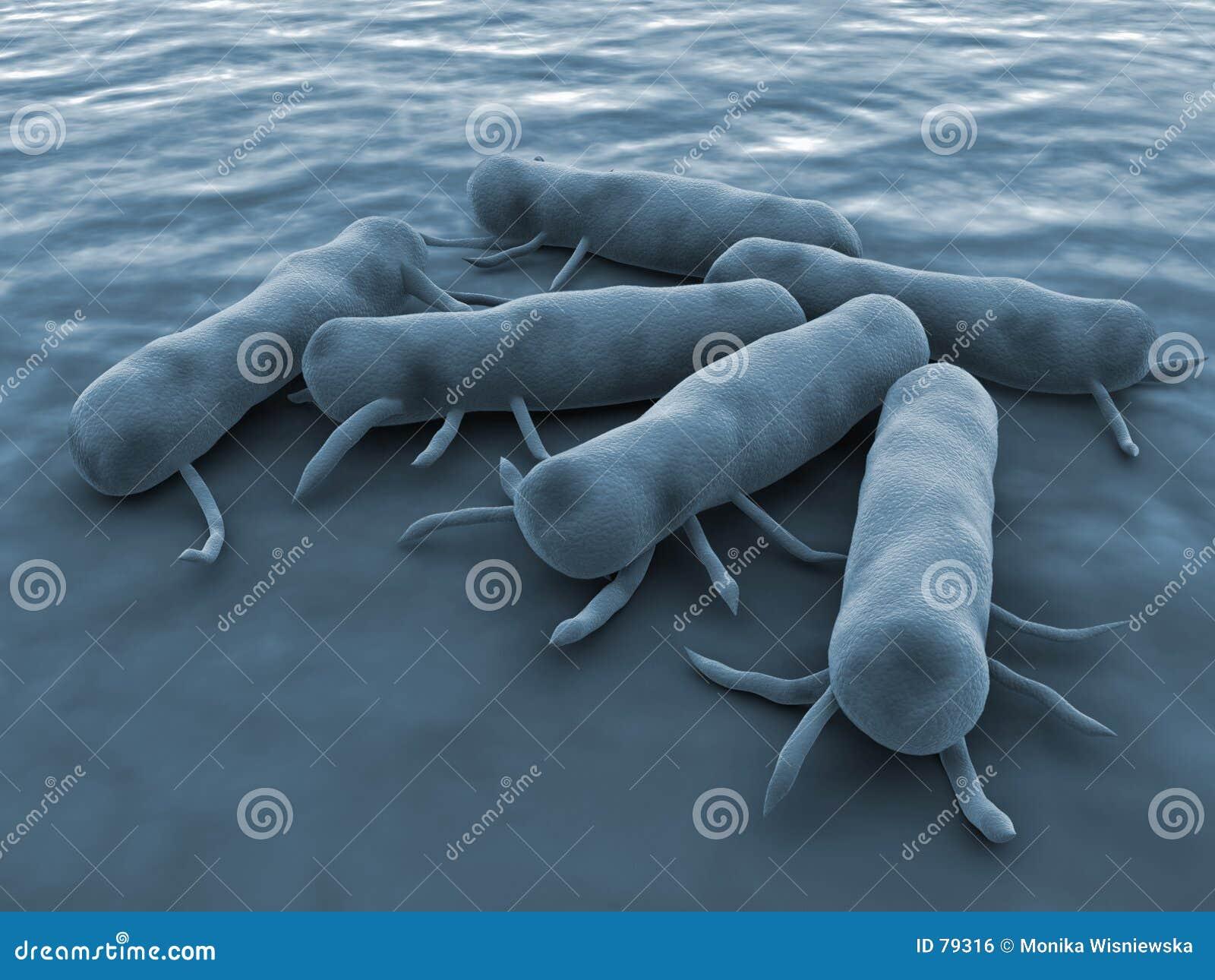 Bacterias de las salmonelas