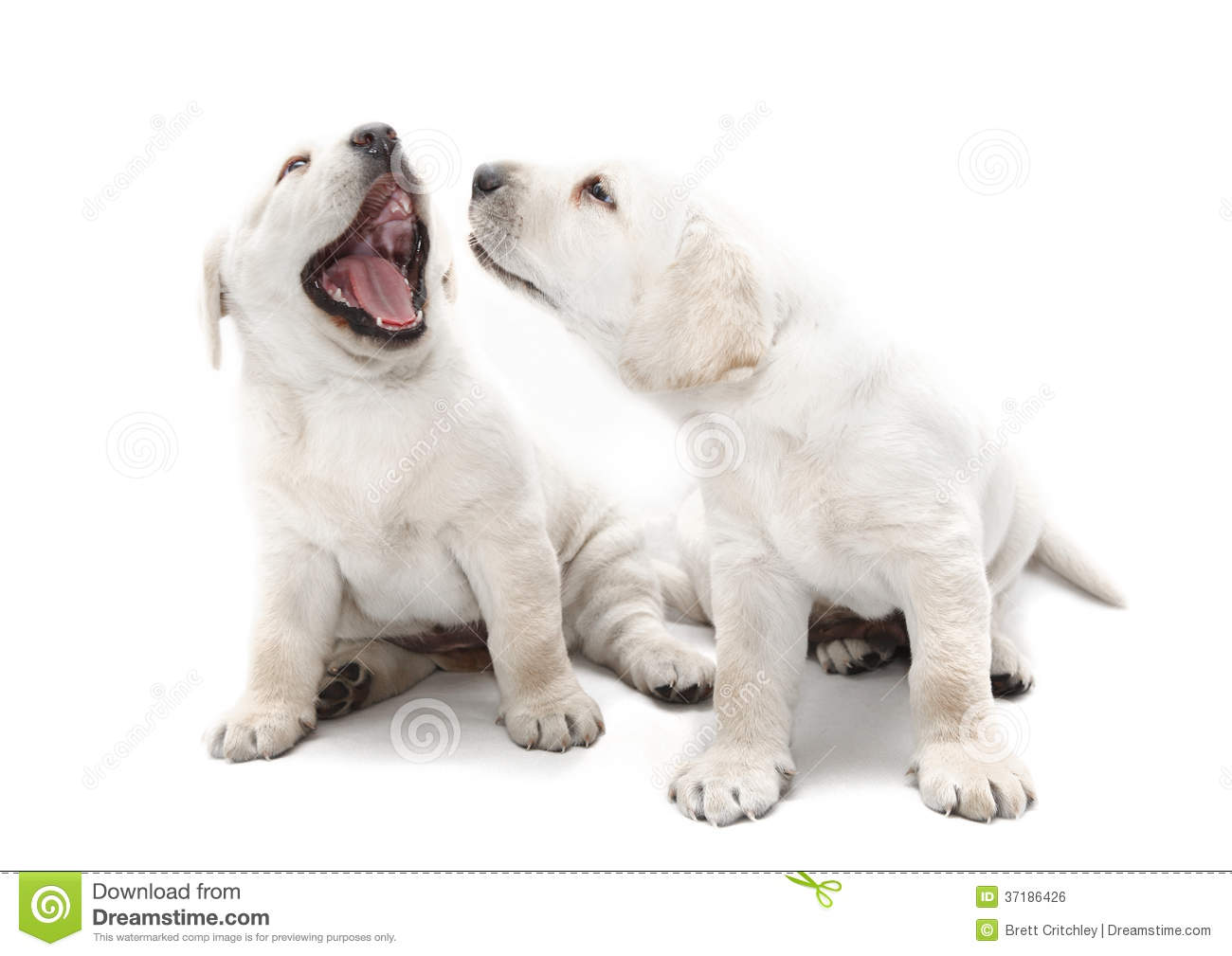 Bad Dog Breath Puppies Royalty Free Stock Image - Image: 37186426