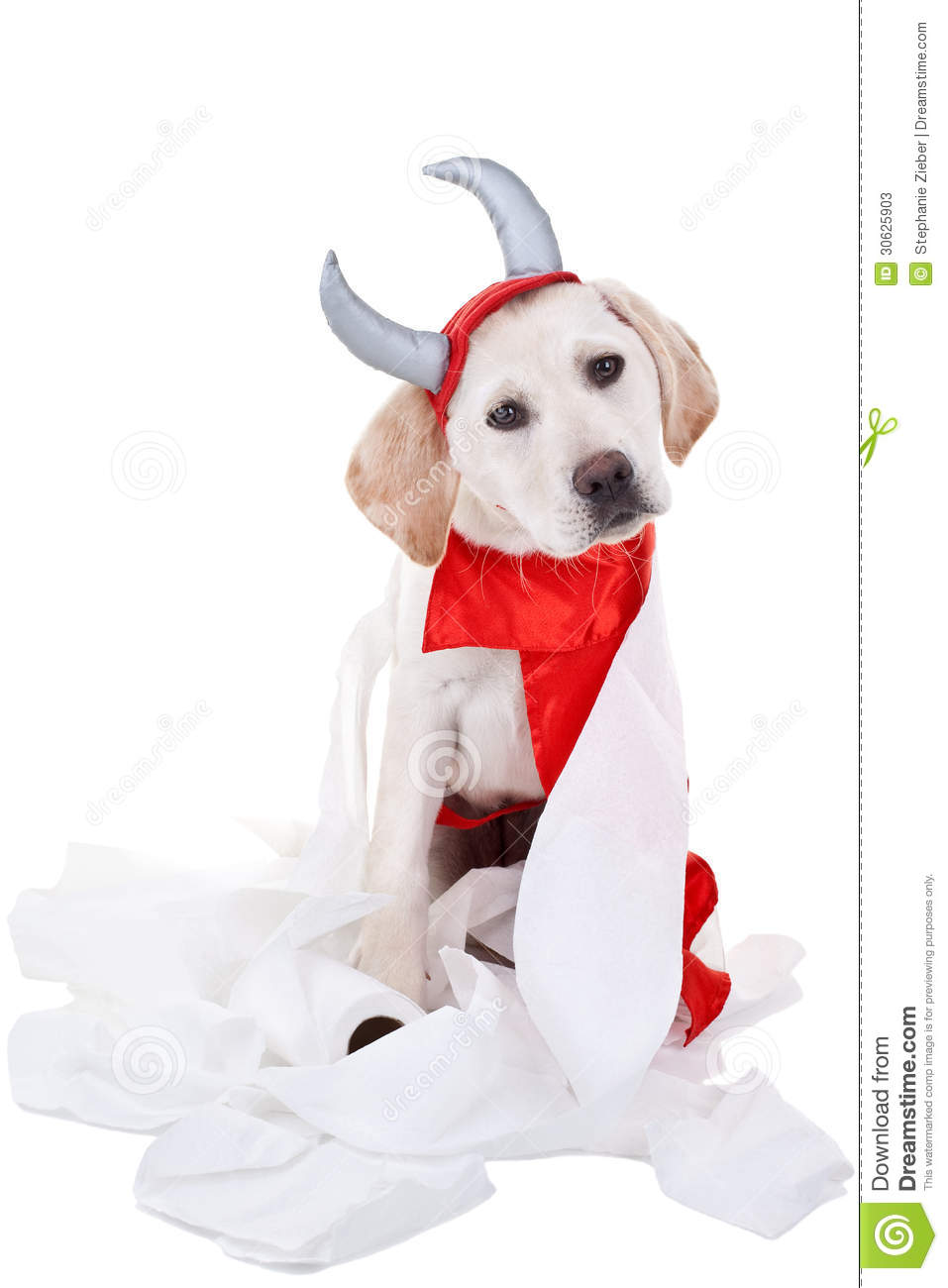 Bad Dog Stock Photos - Image: 30625903