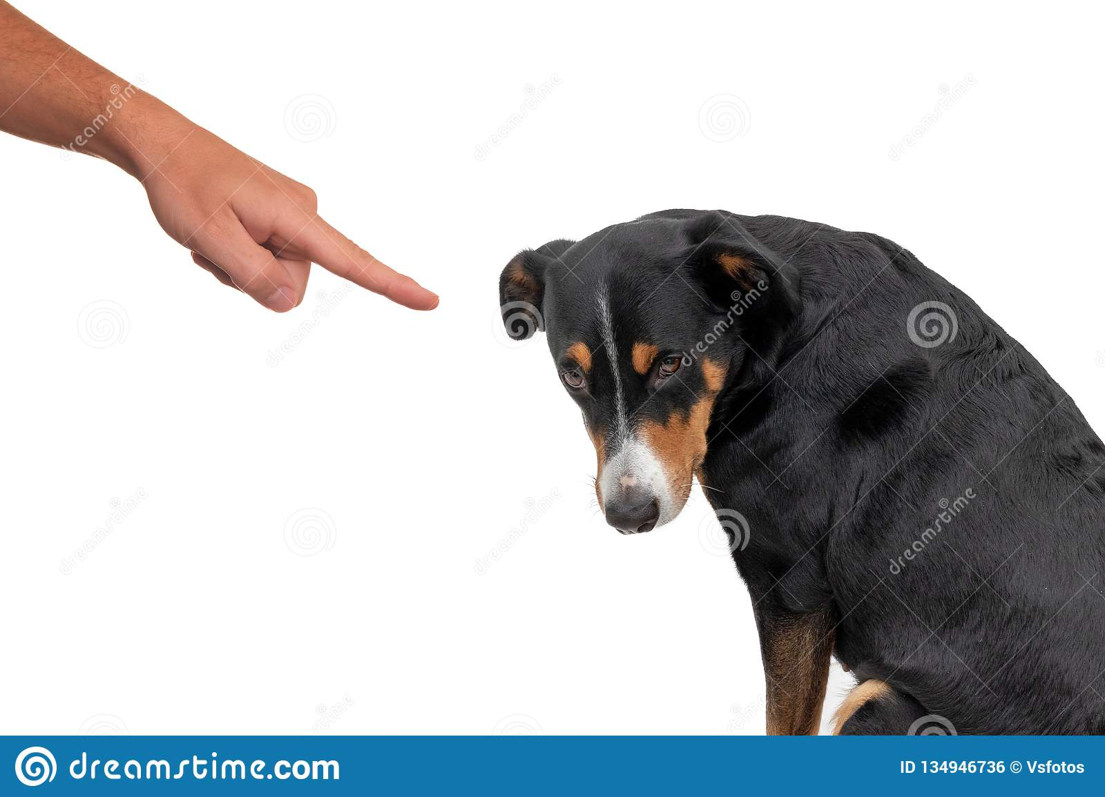 Bad dog, pushing by owner with finger pointing at him, isolated on white background