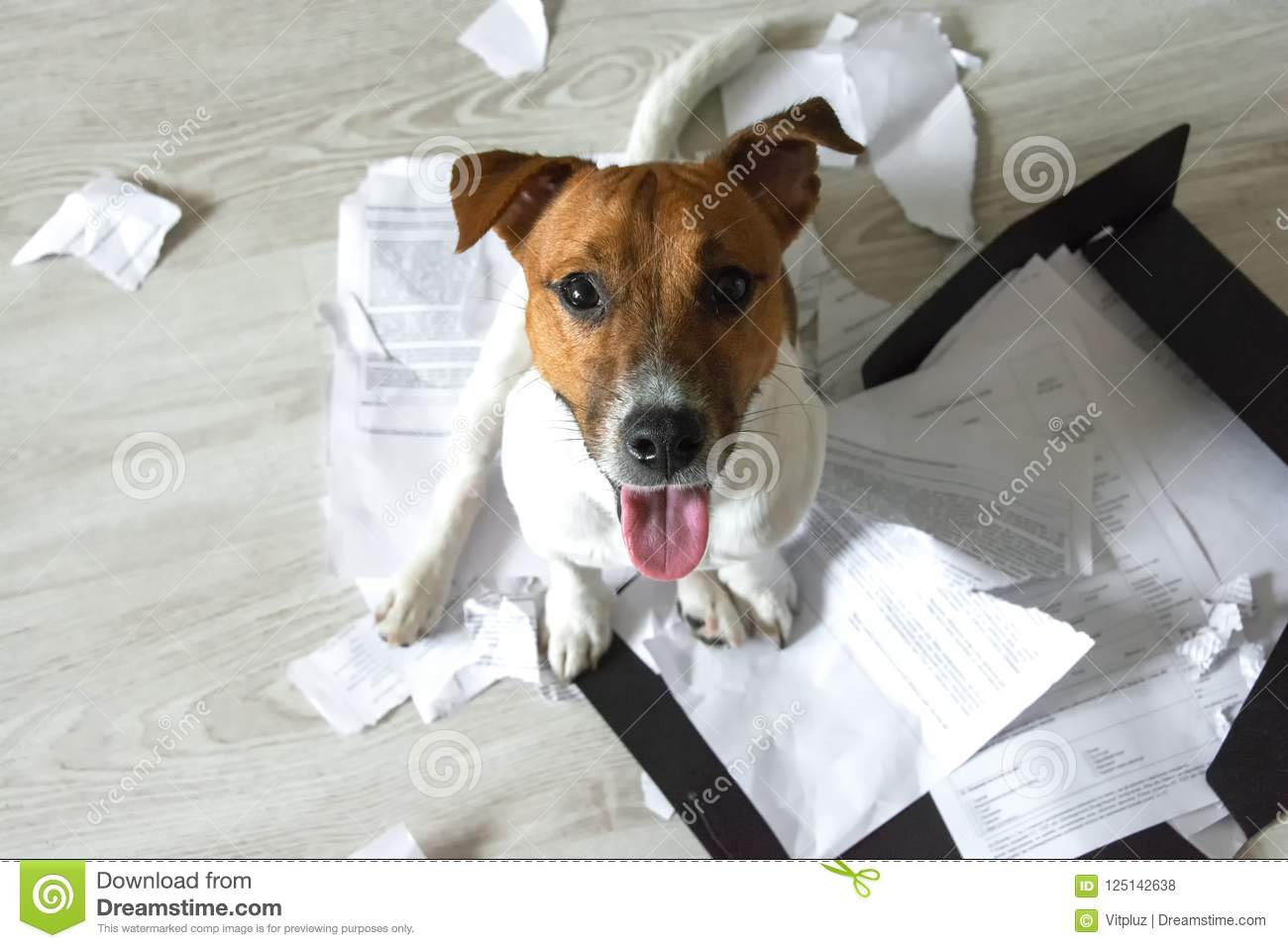 Bad dog on the torn pieces of documents