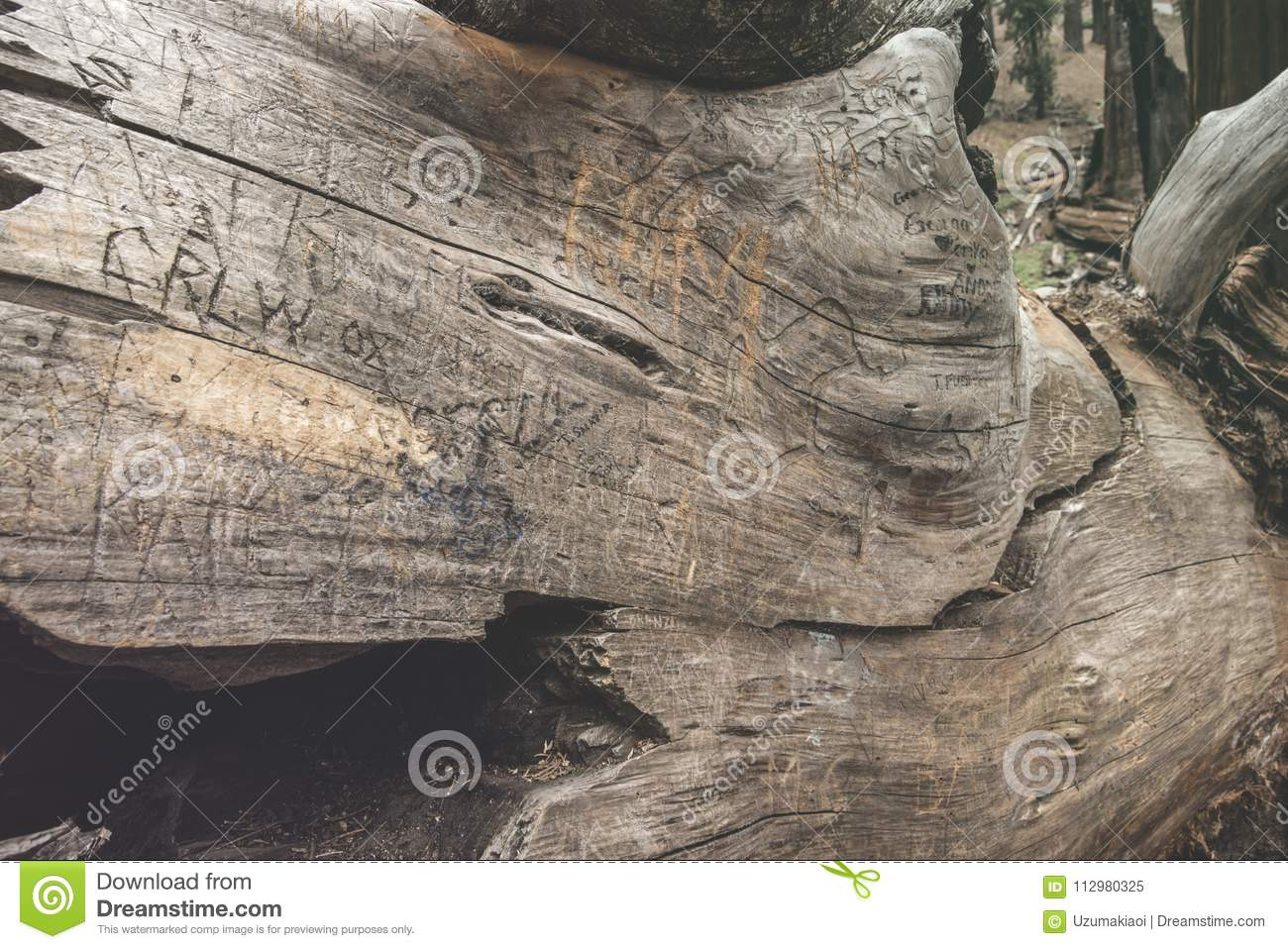 The bad habit traveler who visited the park scraped, write, carve or make any mark their name on the tree or stump