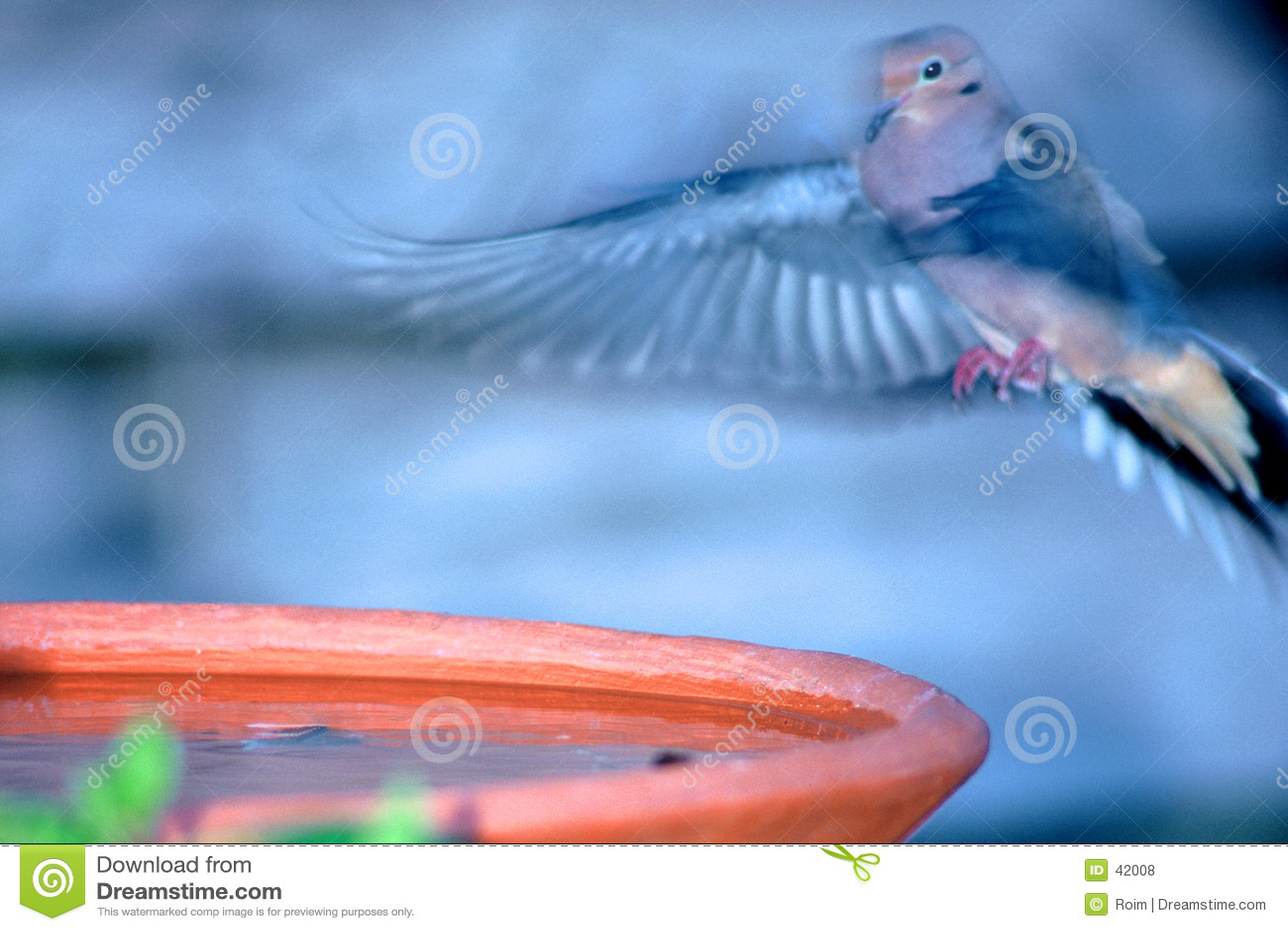Bada fågellandning