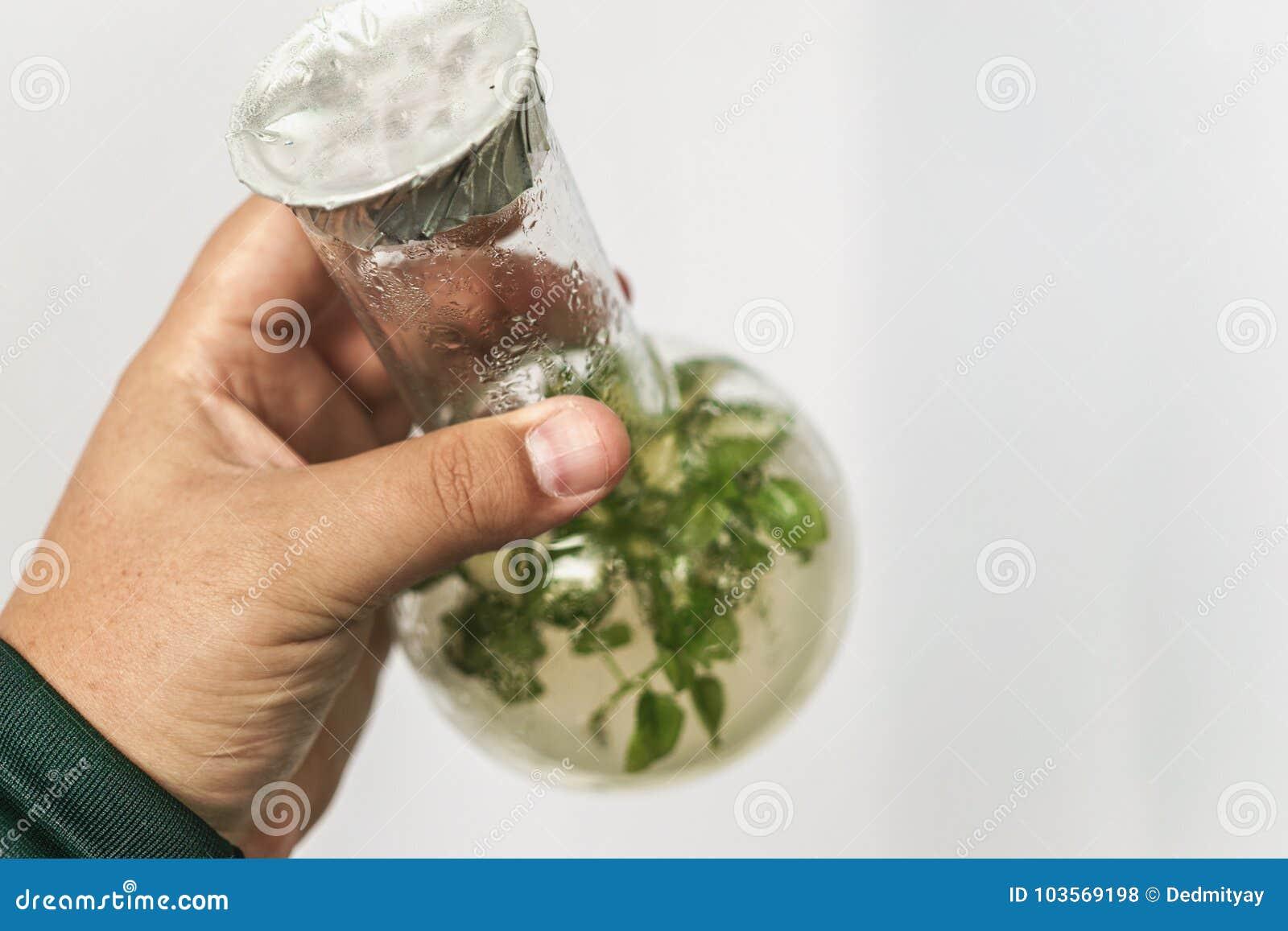 Badacz ręka trzyma mikro rośliny w tescie z tubką Micropropagation technologia w Vitro