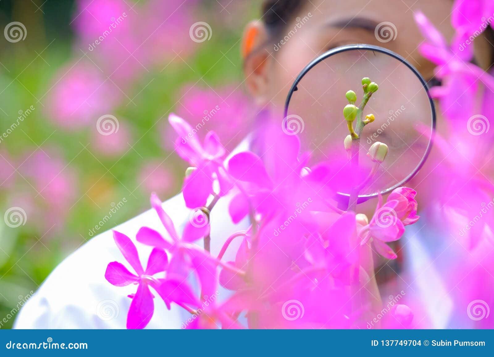 Badacze biorą powiększać połysk purpur orchidee - szkło