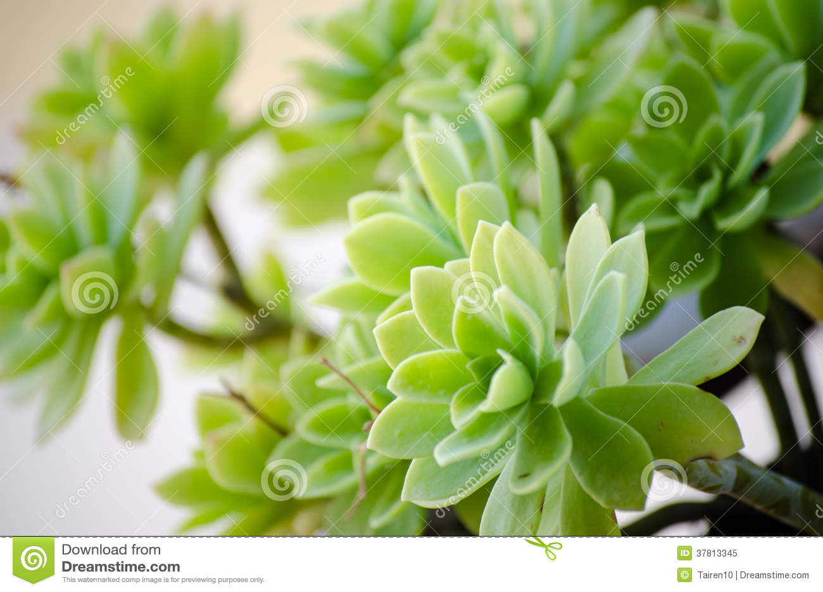 Badan roślina