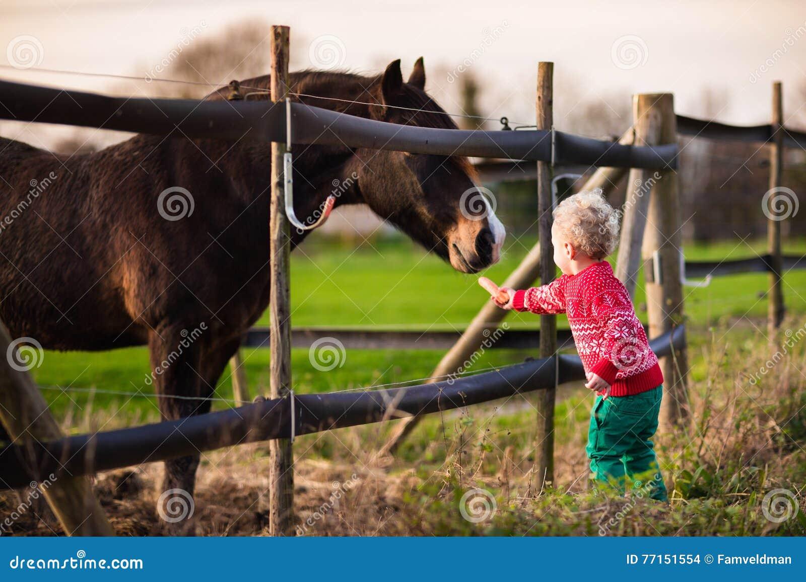 Badine le cheval de alimentation à une ferme