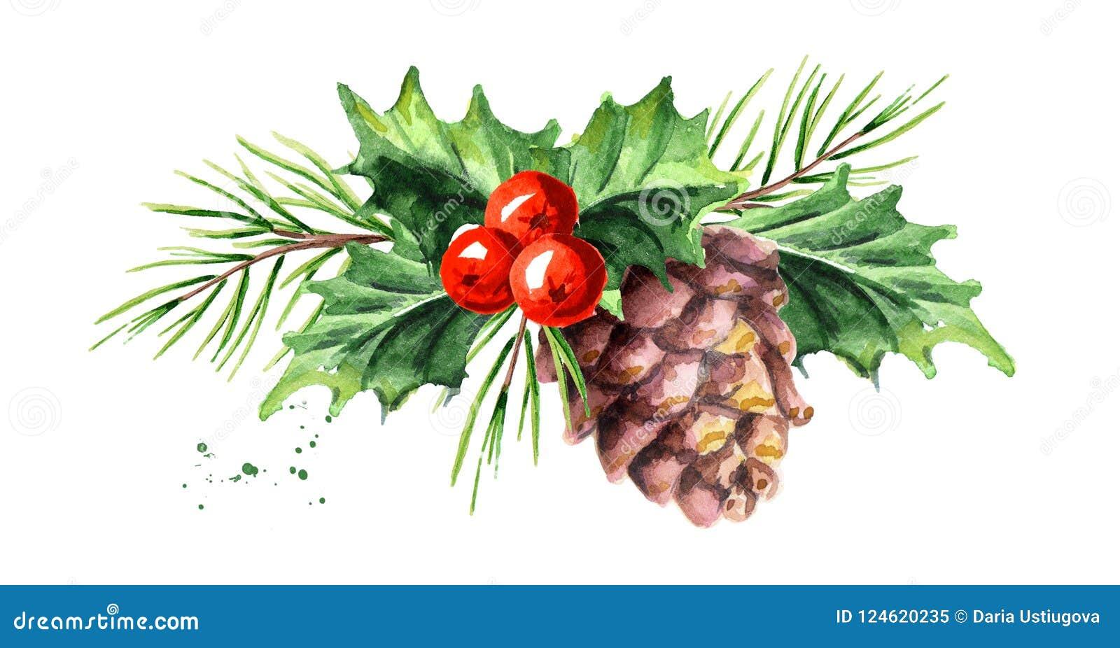 Baga decorativa do azevinho do símbolo do Natal e do ano novo com cone do pinho e composição do ramo A ilustração tirada mão da a