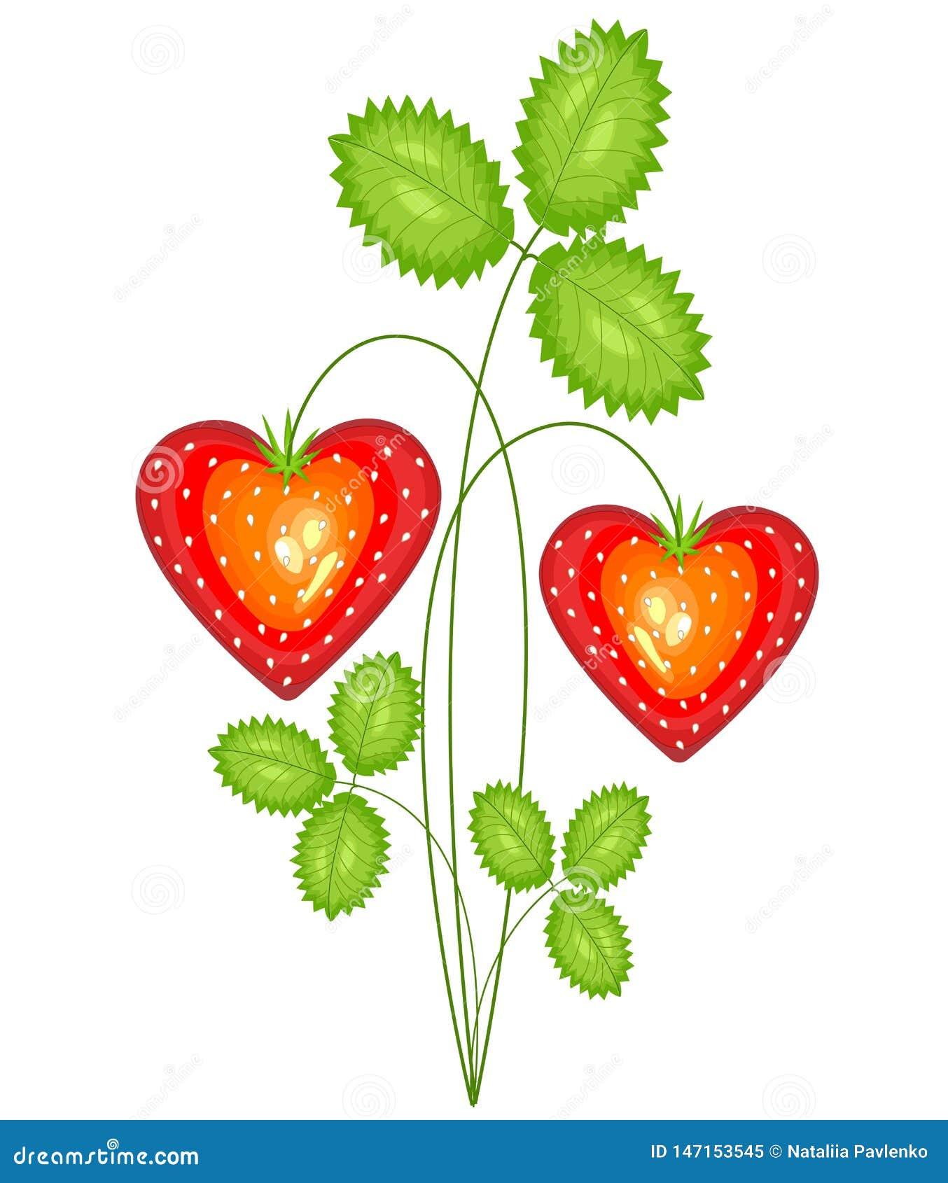 Baga vermelha na forma do coração Morango doce madura Presente no amor ao dia do Valentim s Ilustra??o do vetor
