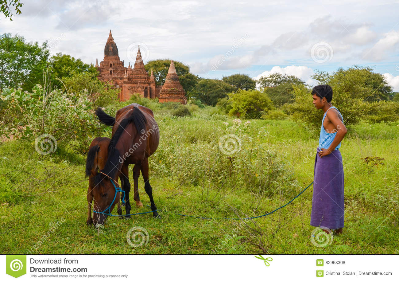 BAGAN, MYANMAR- SEPTEMBER 12, 2016: A cowherd with his cows next to one of the many pagodas of Bagan, Myanmar