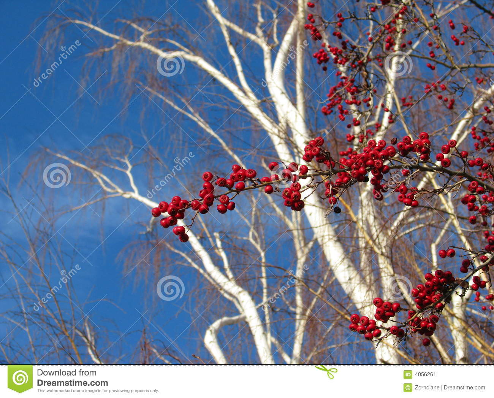 Bagas do inverno de encontro ao céu azul