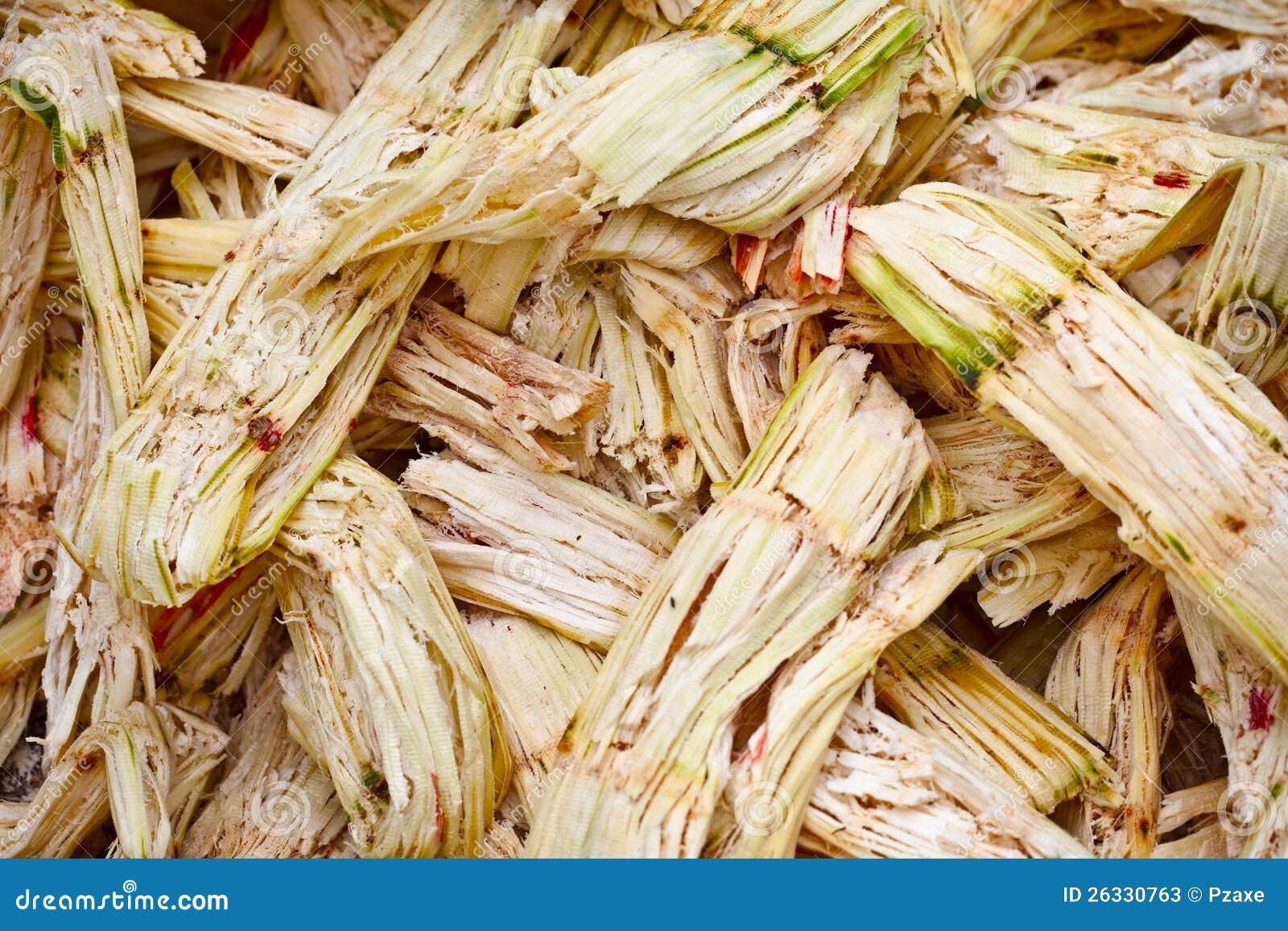 Bagassa della canna da zucchero fotografie stock for Cabina dell orso dello zucchero