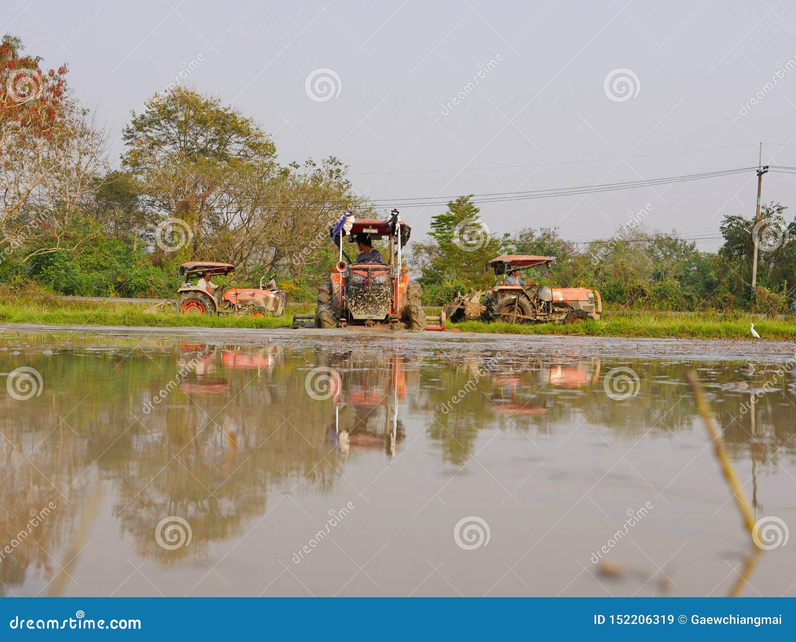 Bagni/suolo sommerso/fangoso in una risaia che è arata dall trattori nel pomeriggio caldo in una zona rurale in Tailandia
