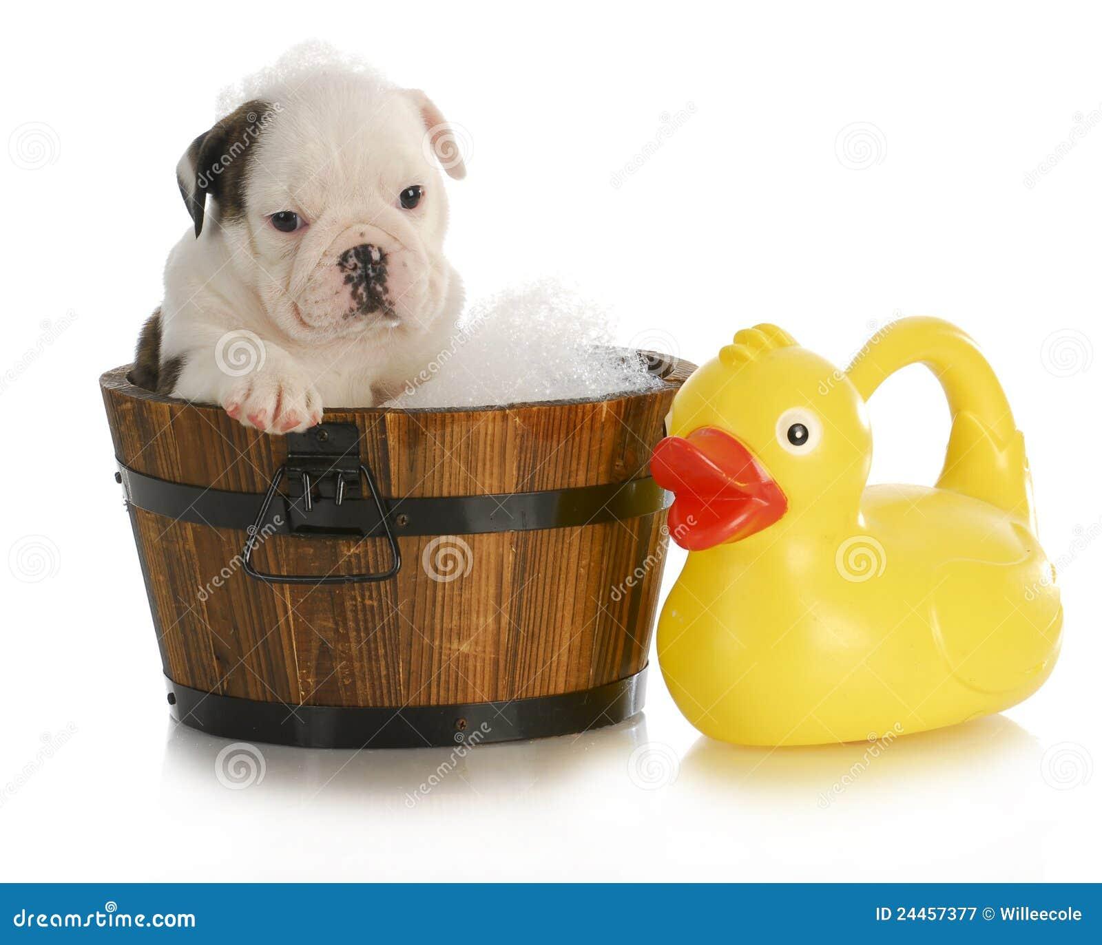 Bagno del cane