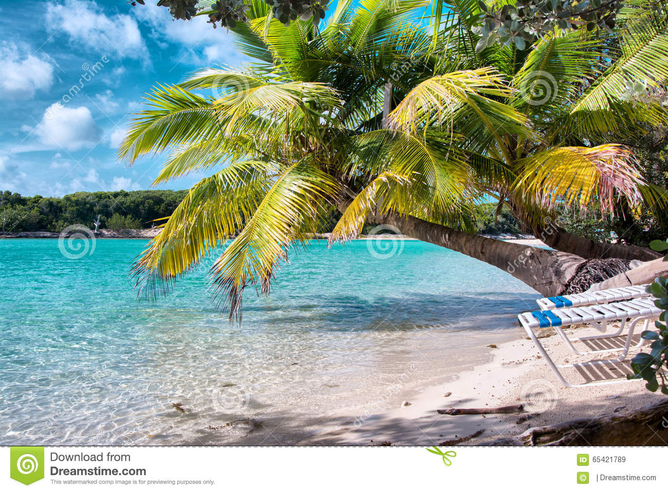 Bahamas Blue Lagoon Beach Stock Image Image Of Tree 65421789