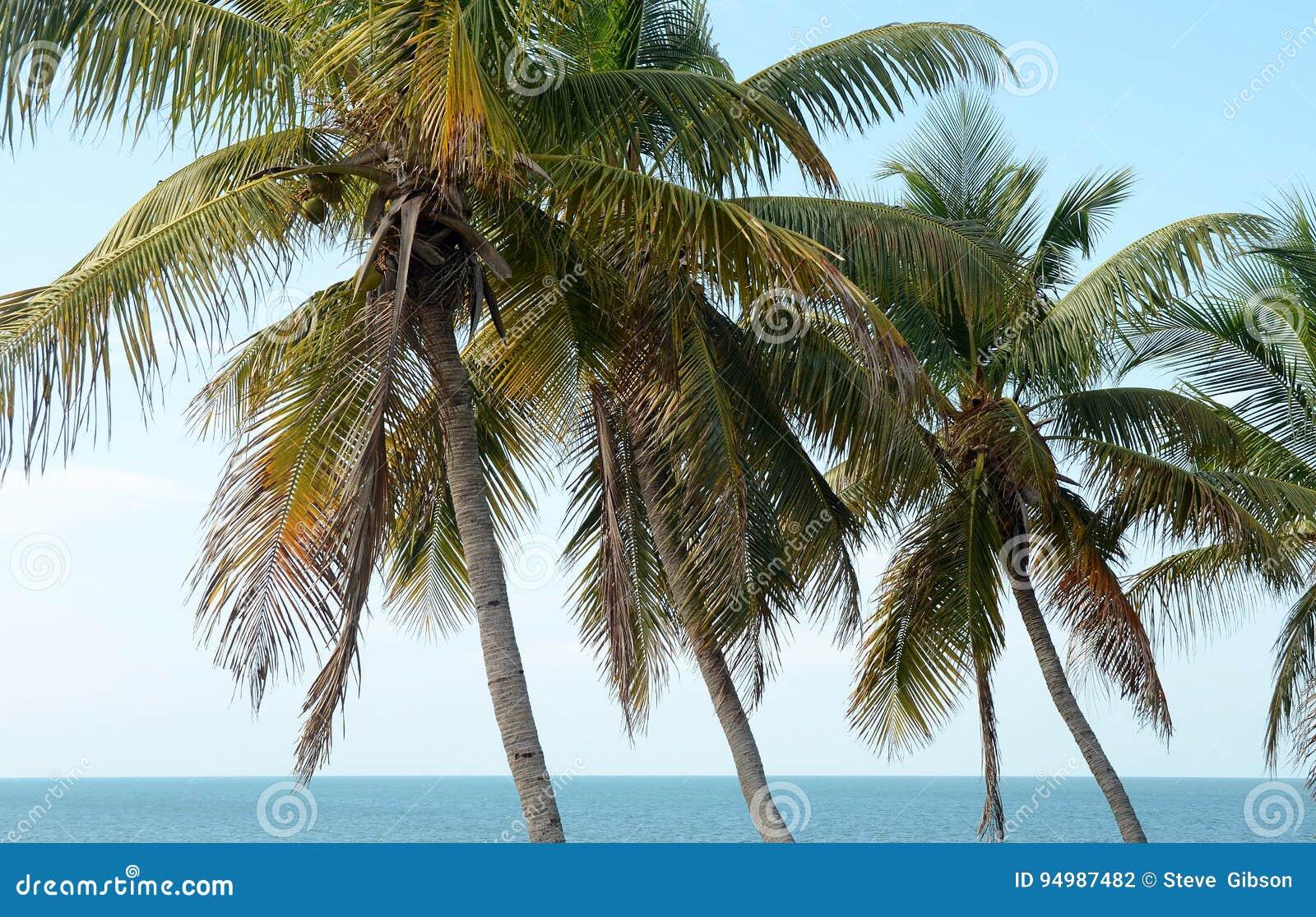 Bahia Honda palmy 3