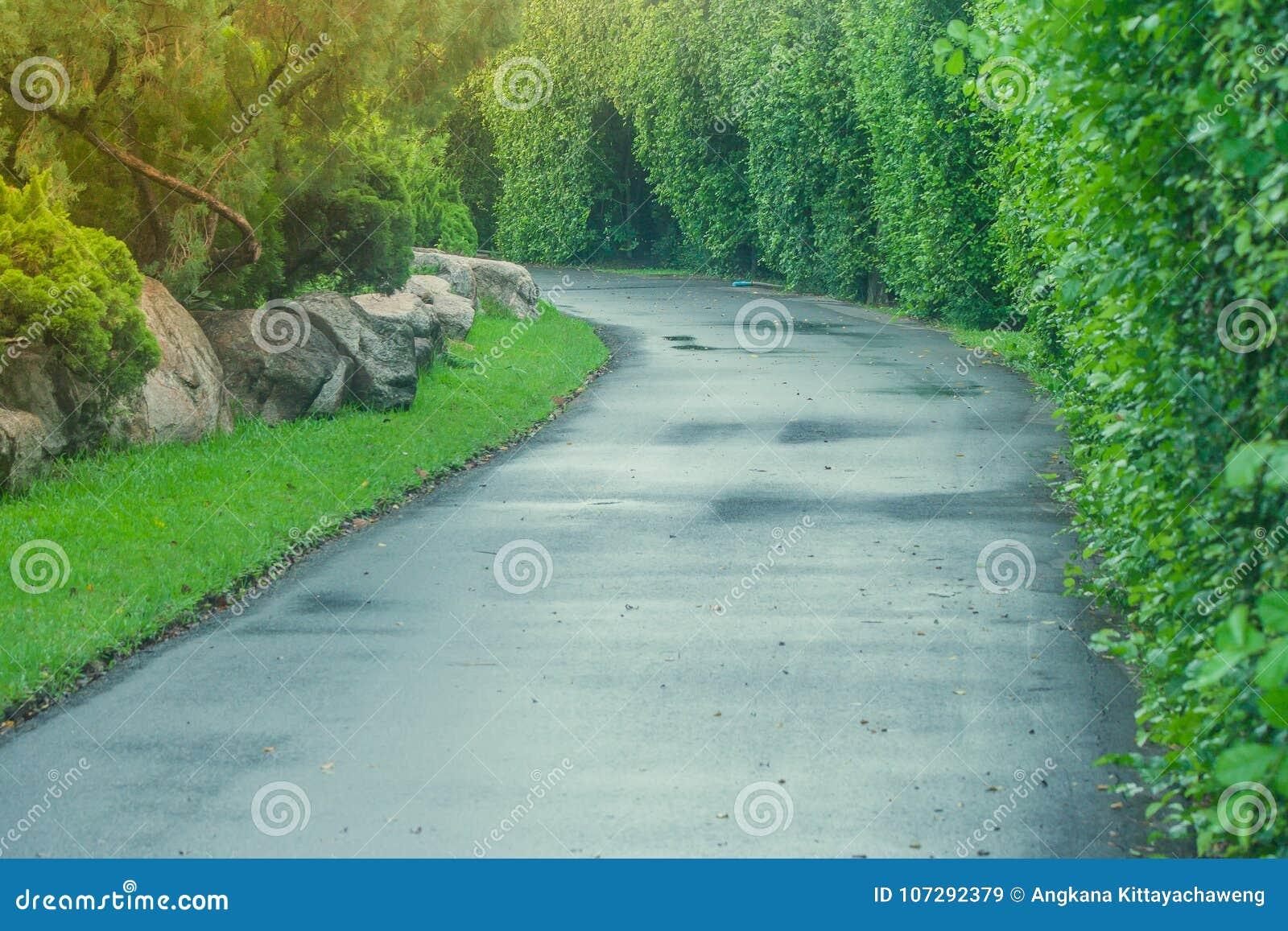 Bahn der schönen Ansicht oder Park des Gehwegs öffentlich umgeben mit grünem natürlichem und Sonnenlichthintergrund