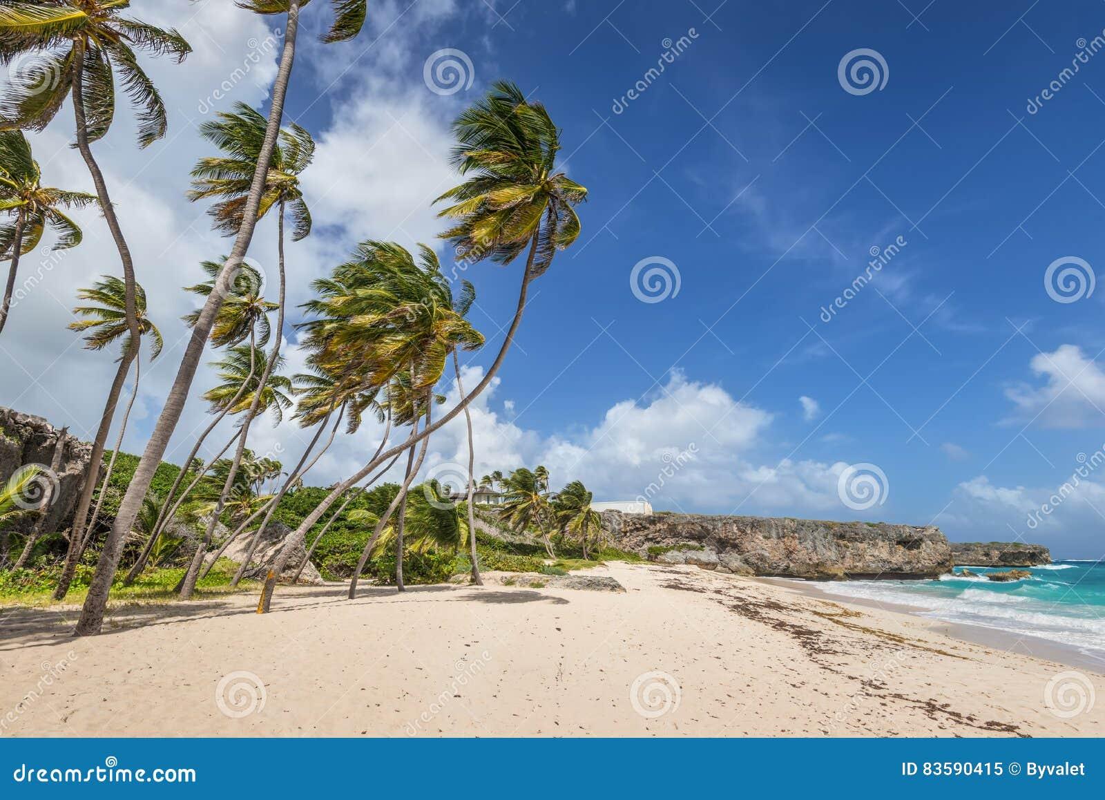 Baia tropicale del fondo della spiaggia sull 39 isola dei for Isola di saint honore caraibi