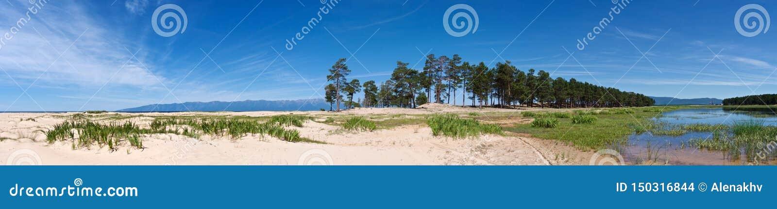 Baikal lakeshore met wit zand en altijdgroene pijnbomen