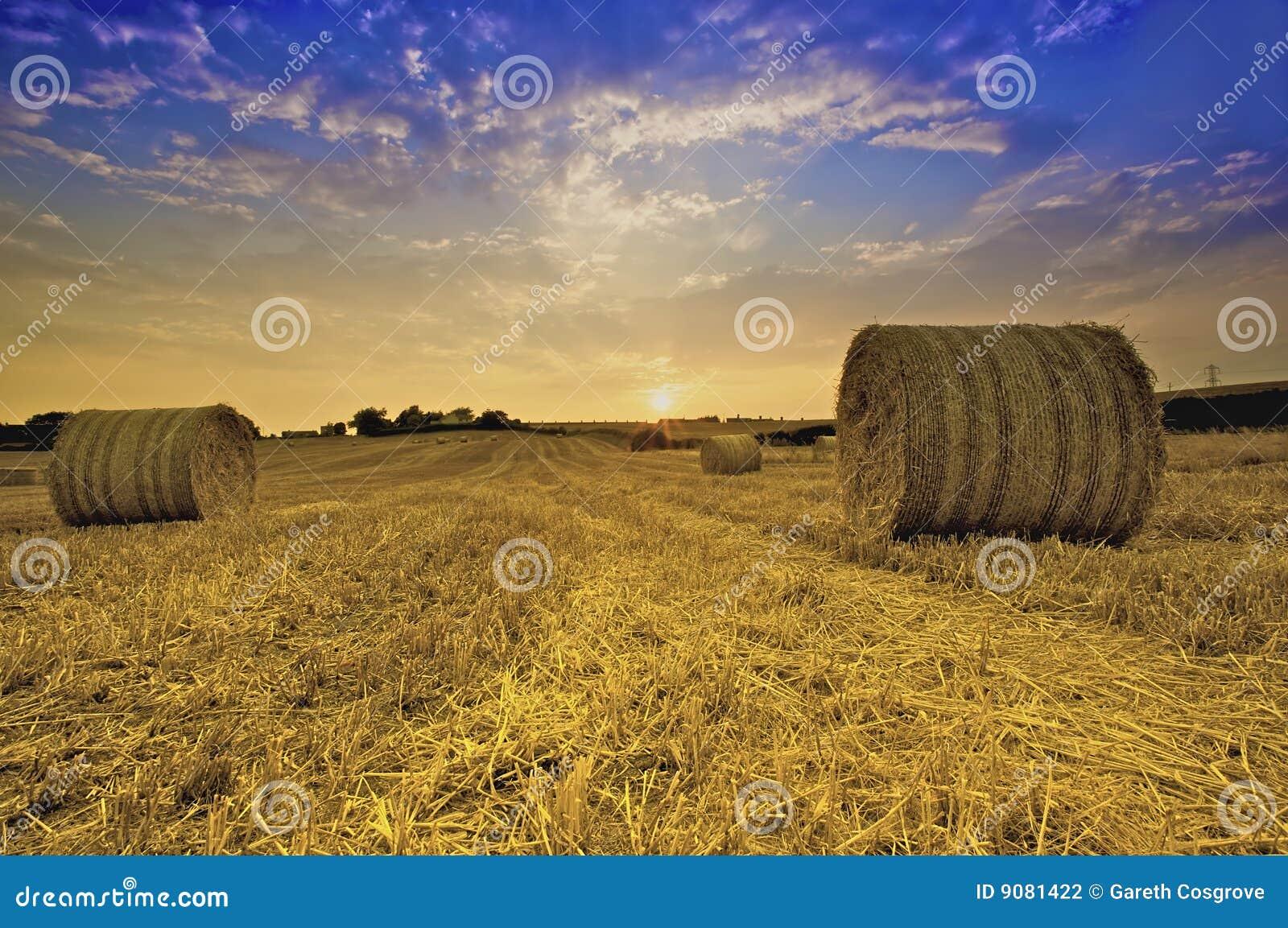 Bails of Golden Hay