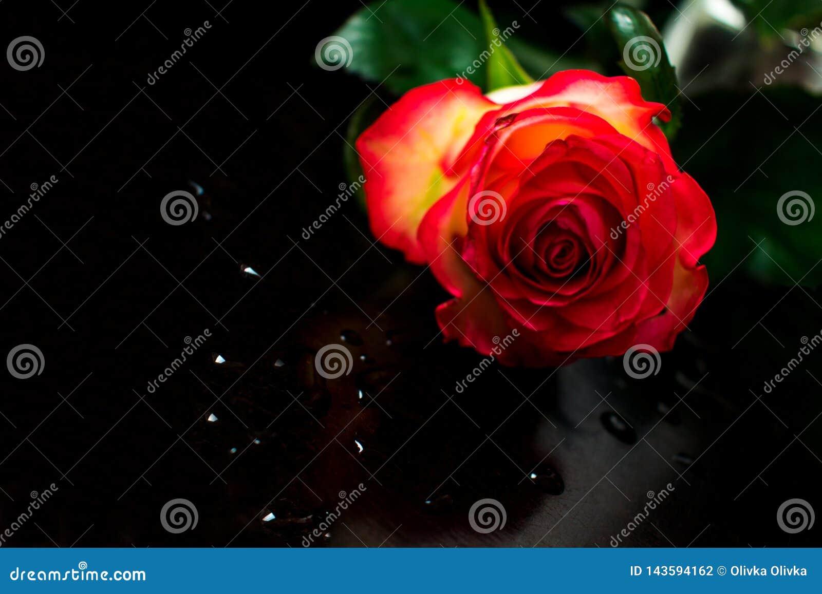 Baisses d une rose rouge et d eau